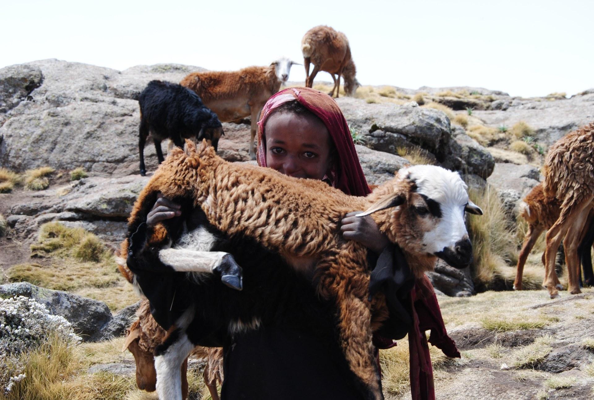 Ein äthiopisches Mädchen hält ein Lamm auf dem Arm