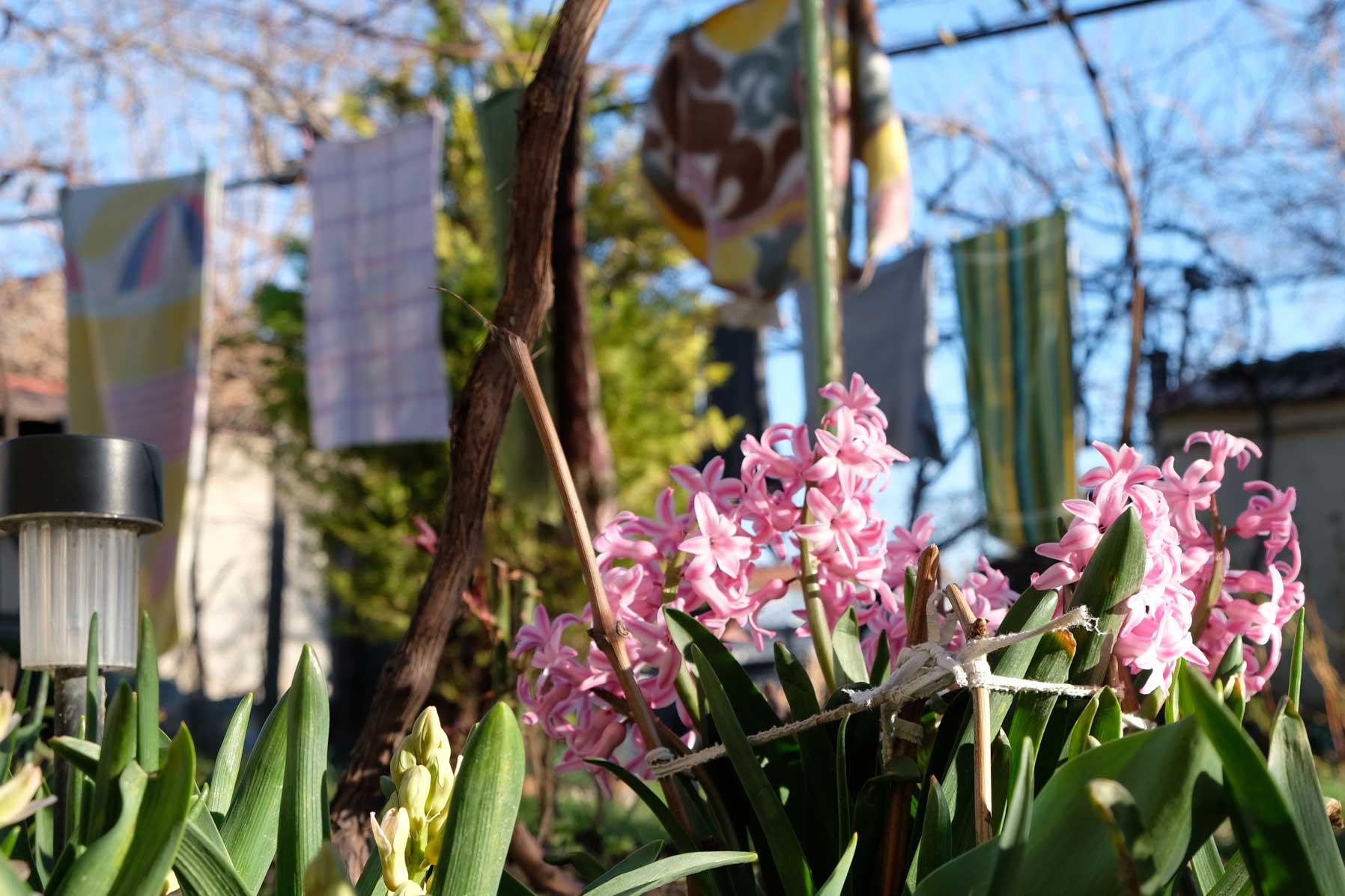 Pinke Blumen in einem Garten