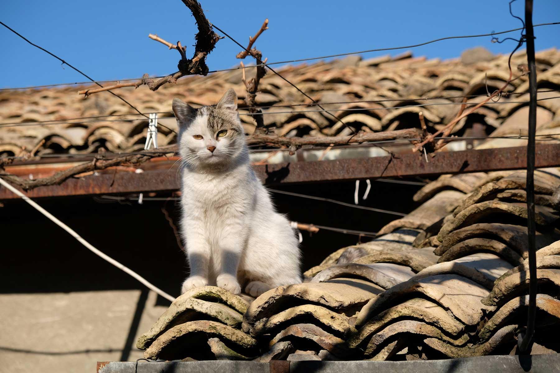 Eine Katze sitzt auf einem Dach
