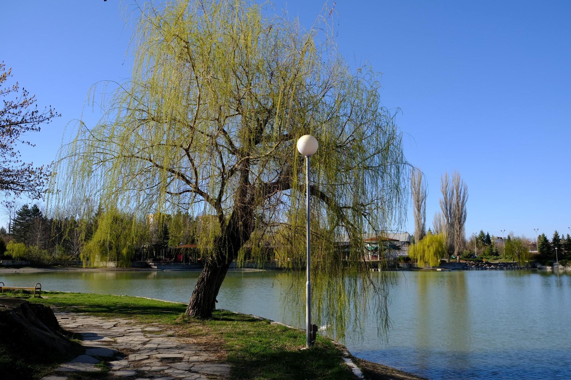 Ein großer Baum steht am Ufer eines Sees