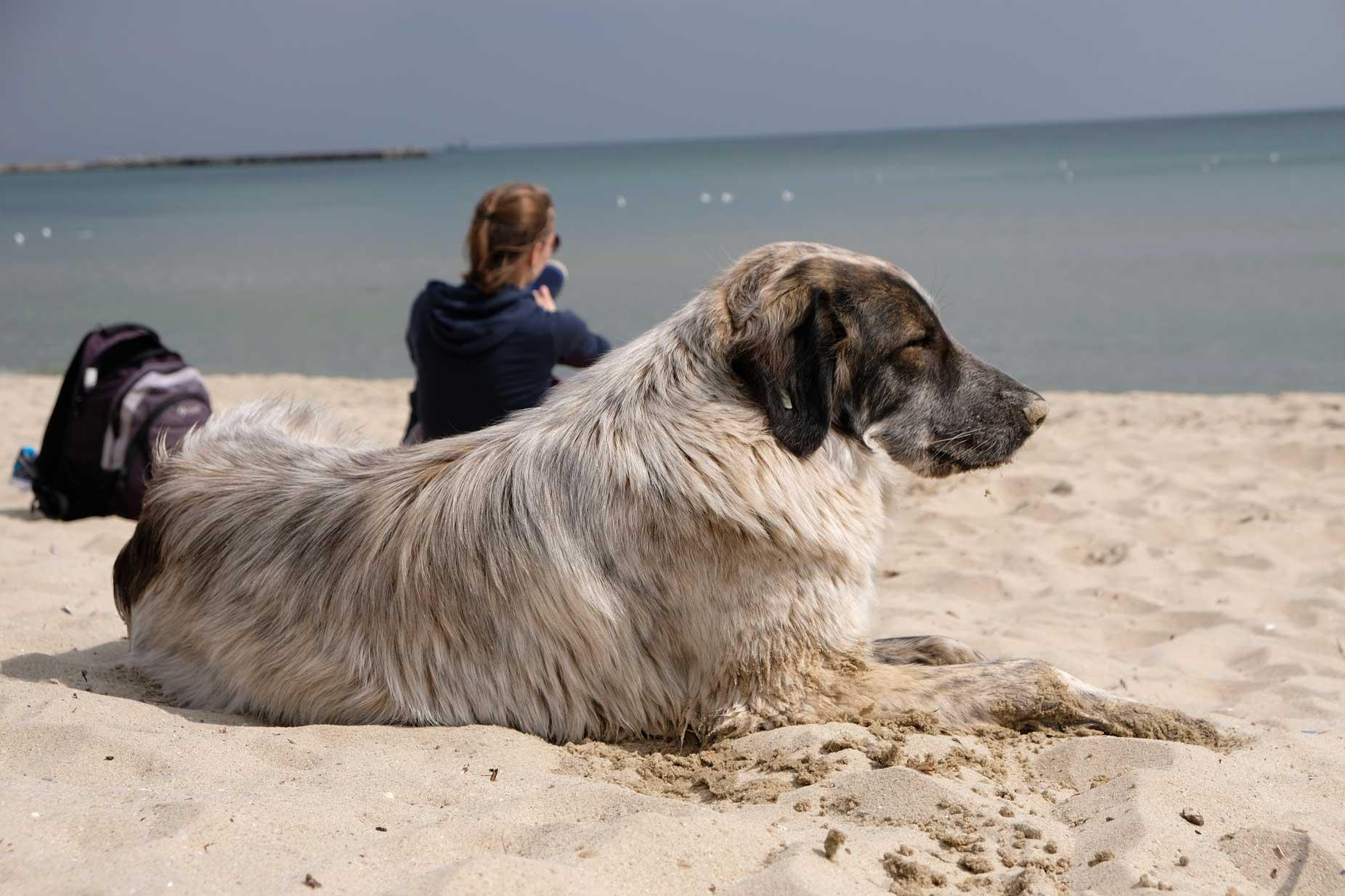 Ein Hund liegt am Strand