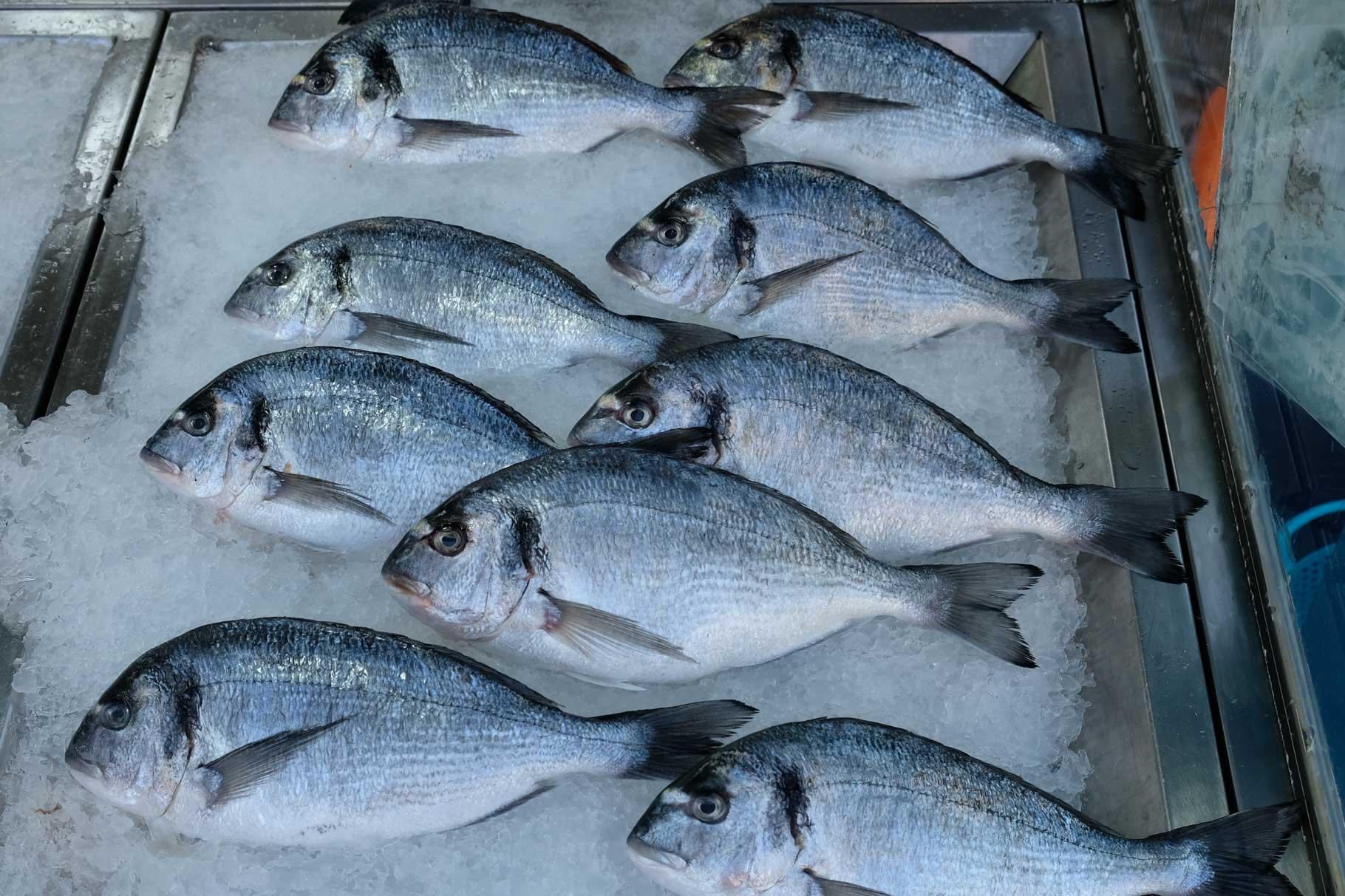 Fische liegen auf Eis