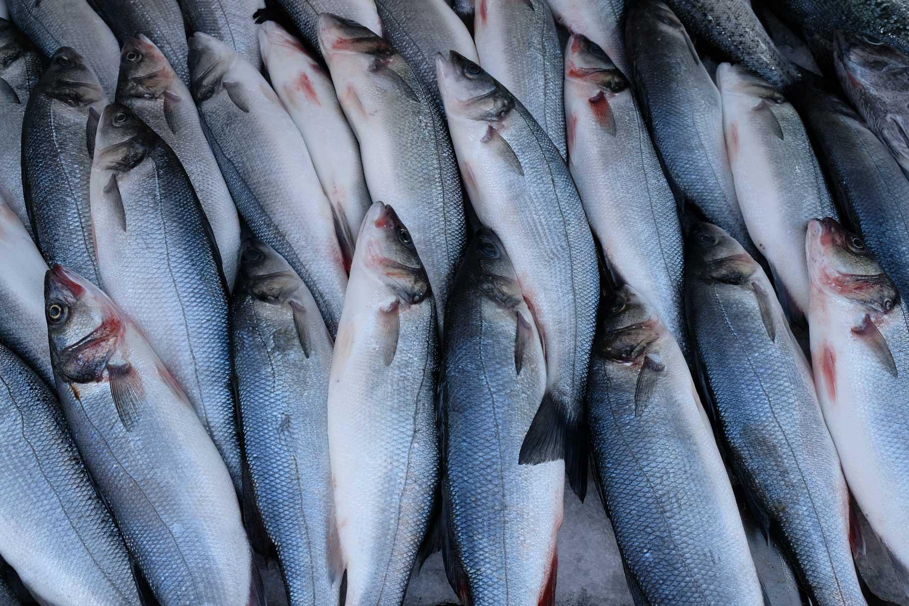 Schön angeordnete Fische