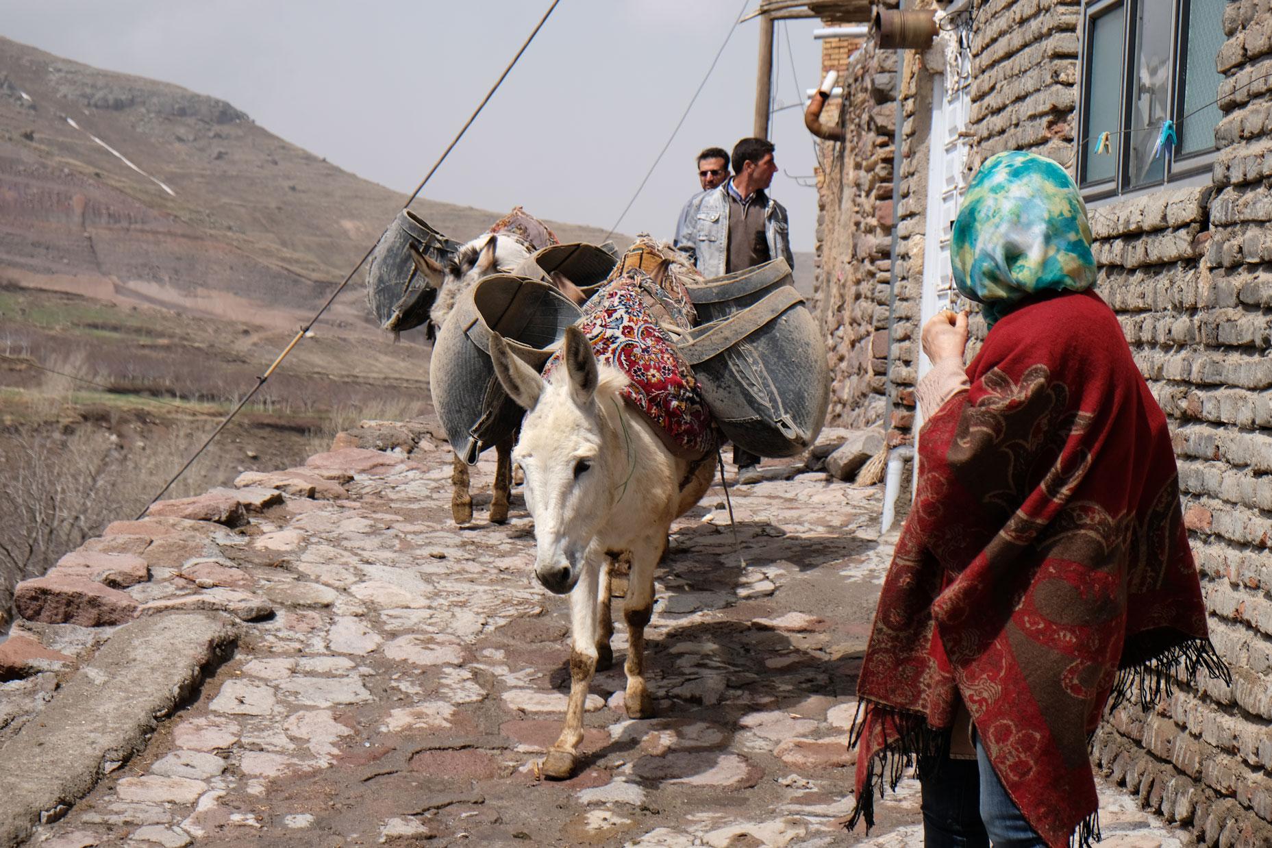 Esel transportieren Lasten in Satteltaschen