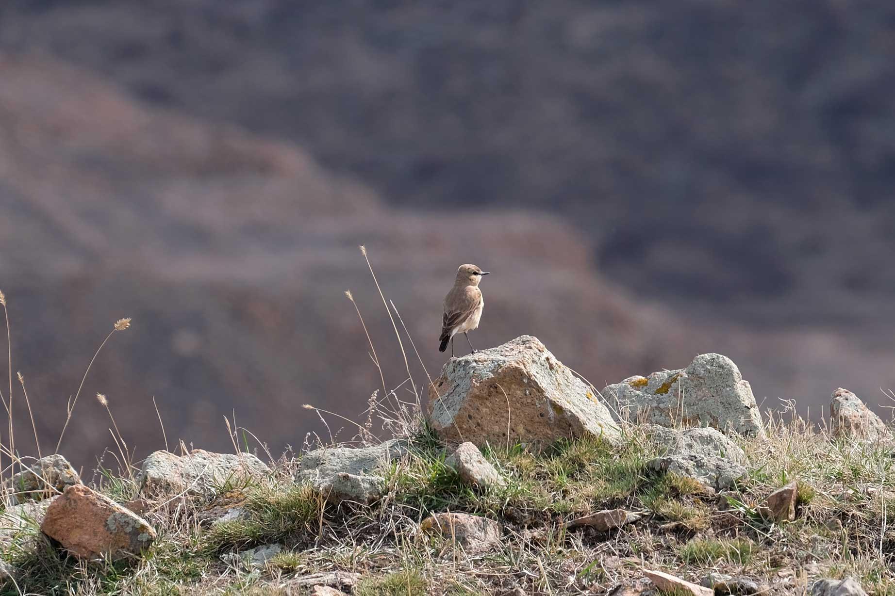 Ein Vogel sitzt auf einem Stein