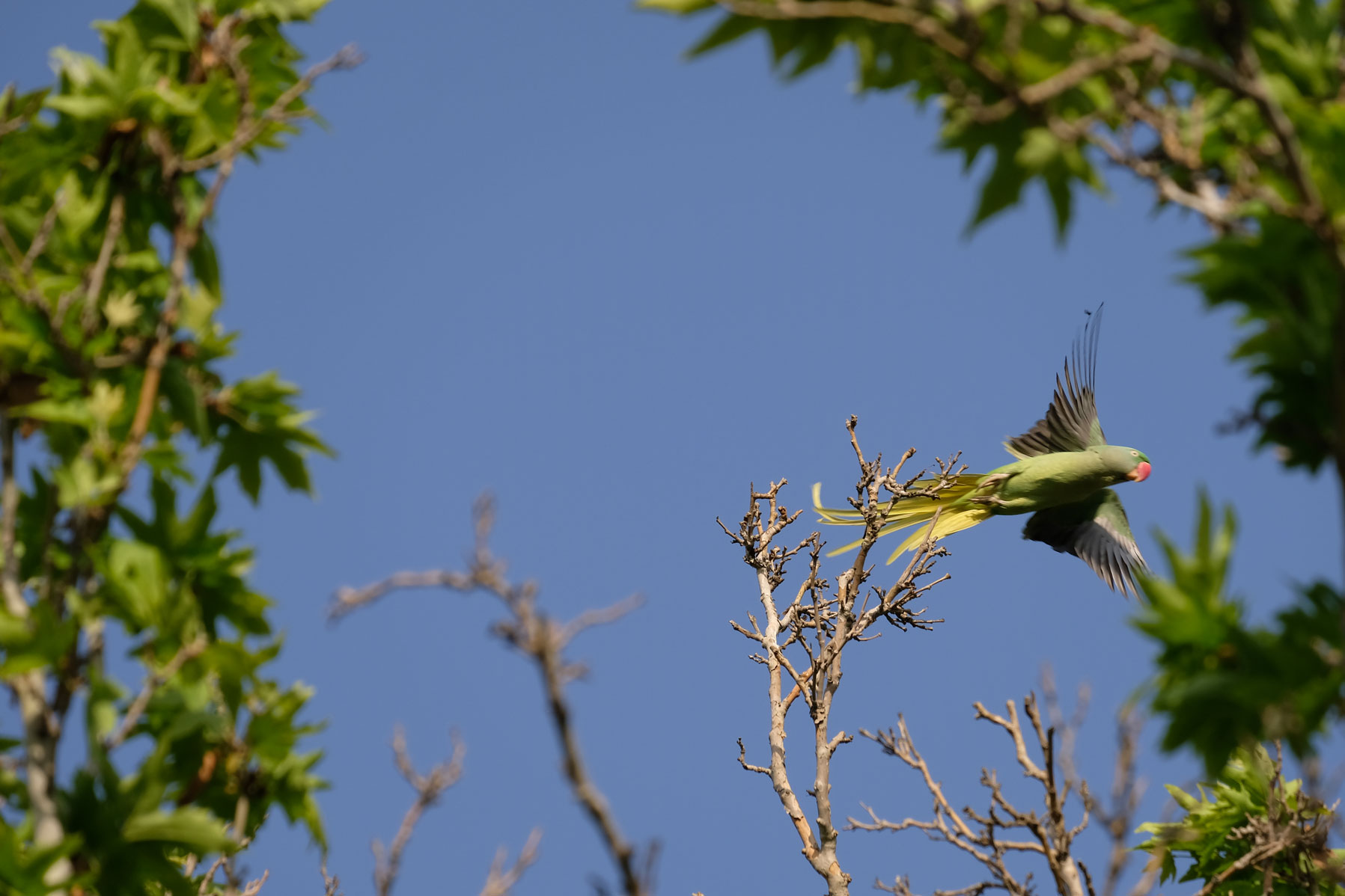 Ein davonfliegender Papagei
