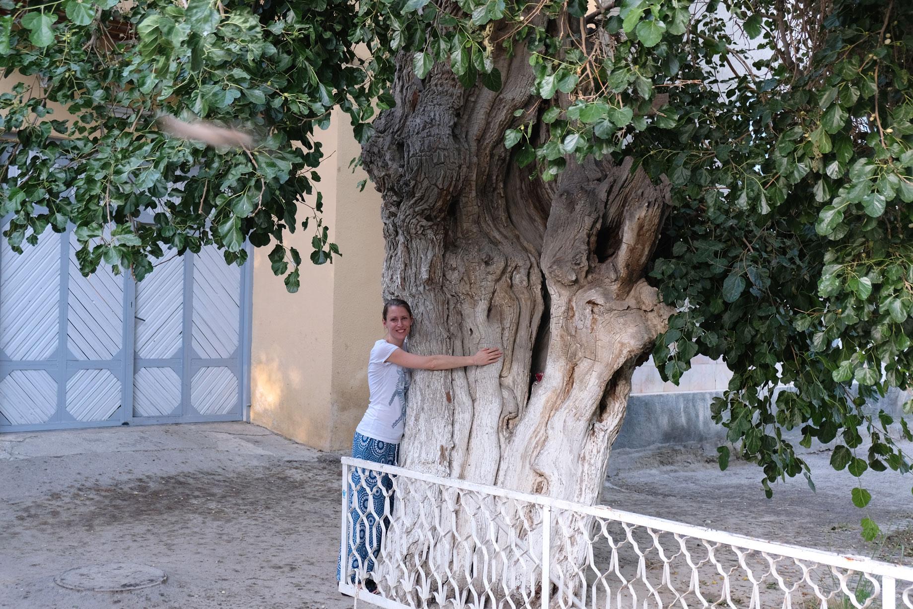Leo umarmt einen riesigen Baum