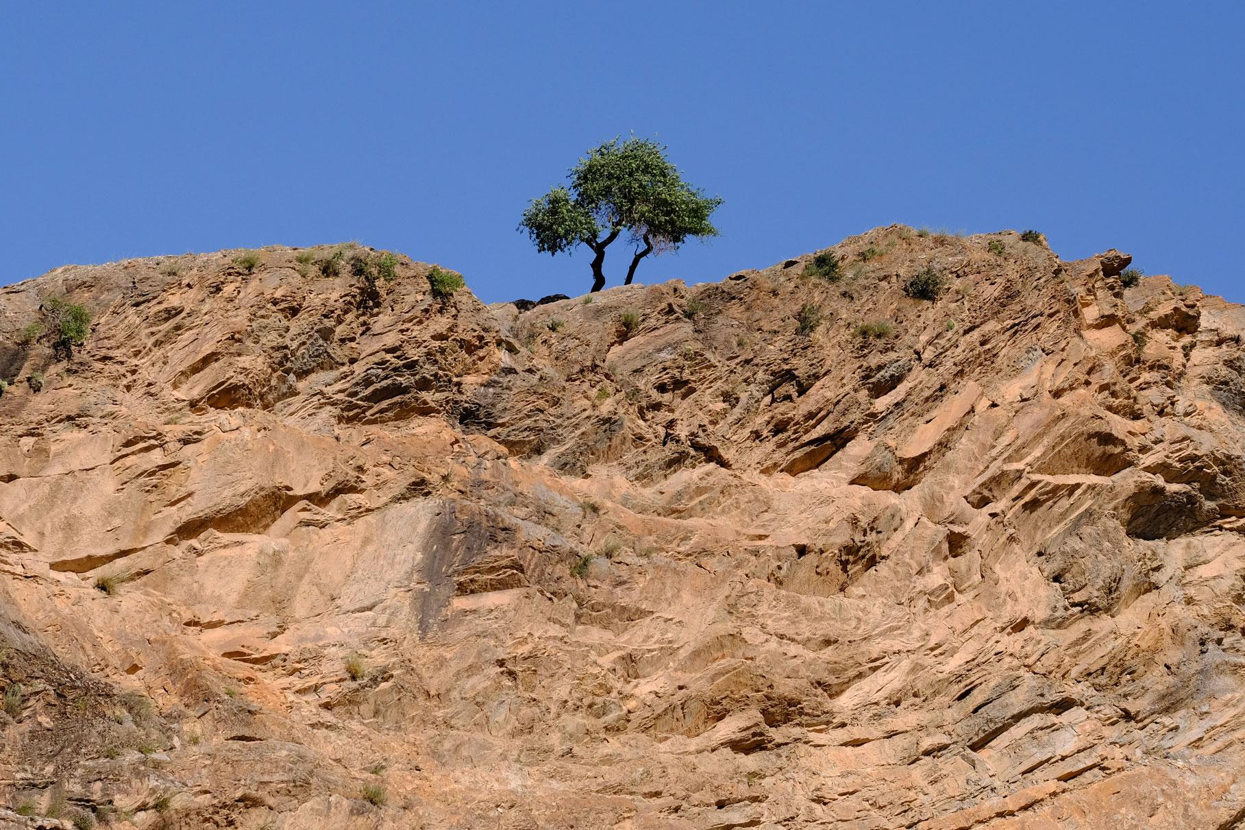 Ein Baum auf einer Felswand