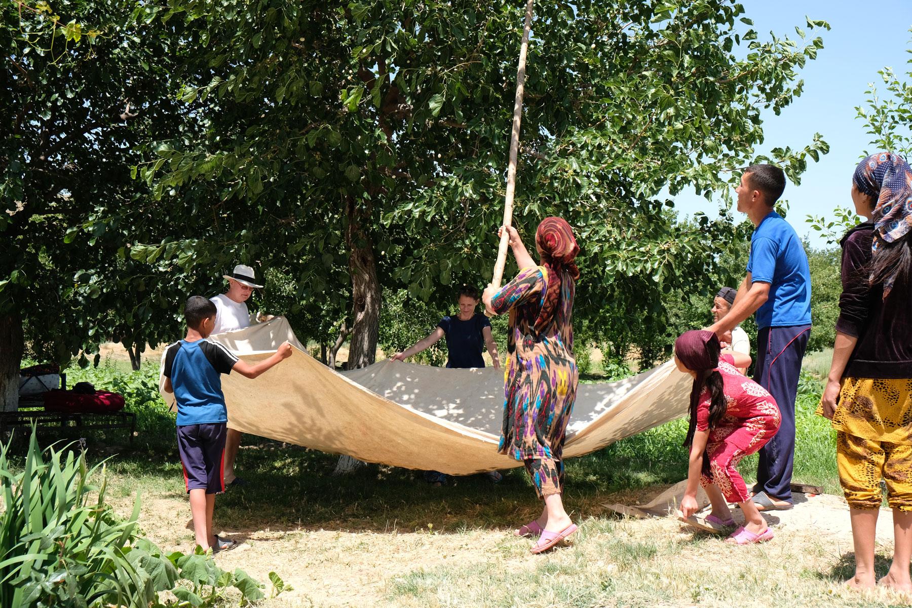 Menschen ernten mit einem großen Tuch Maulbeeren in einem Garten