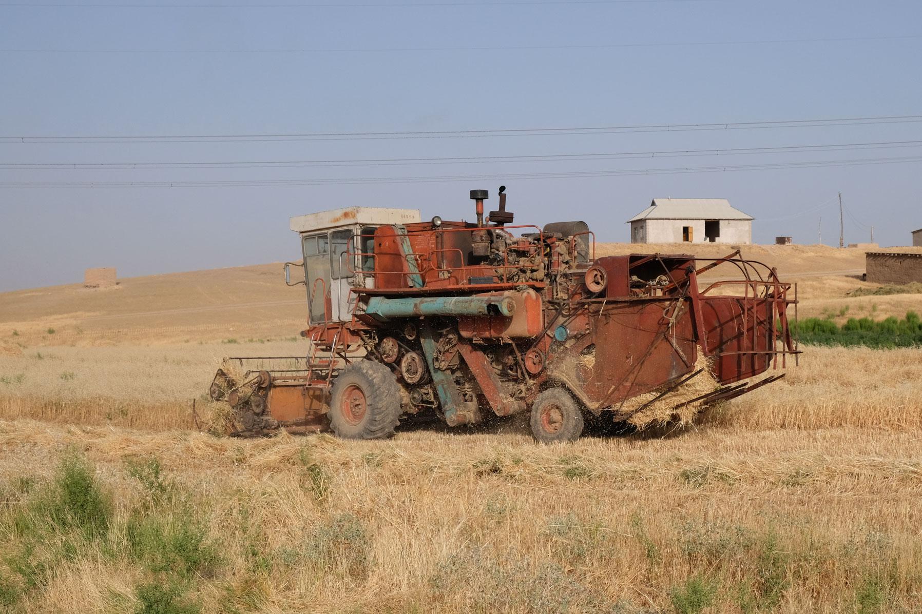 Ein Mähdrescher erntet ein Getreidefeld ab