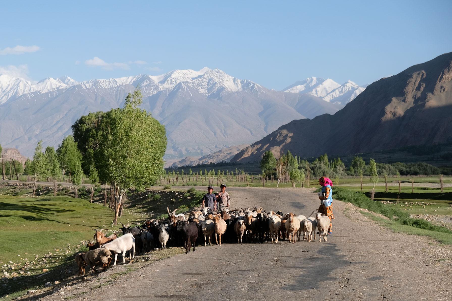 Drei Personen führen eine ZTiegenherde auf dem Pamir Highway.