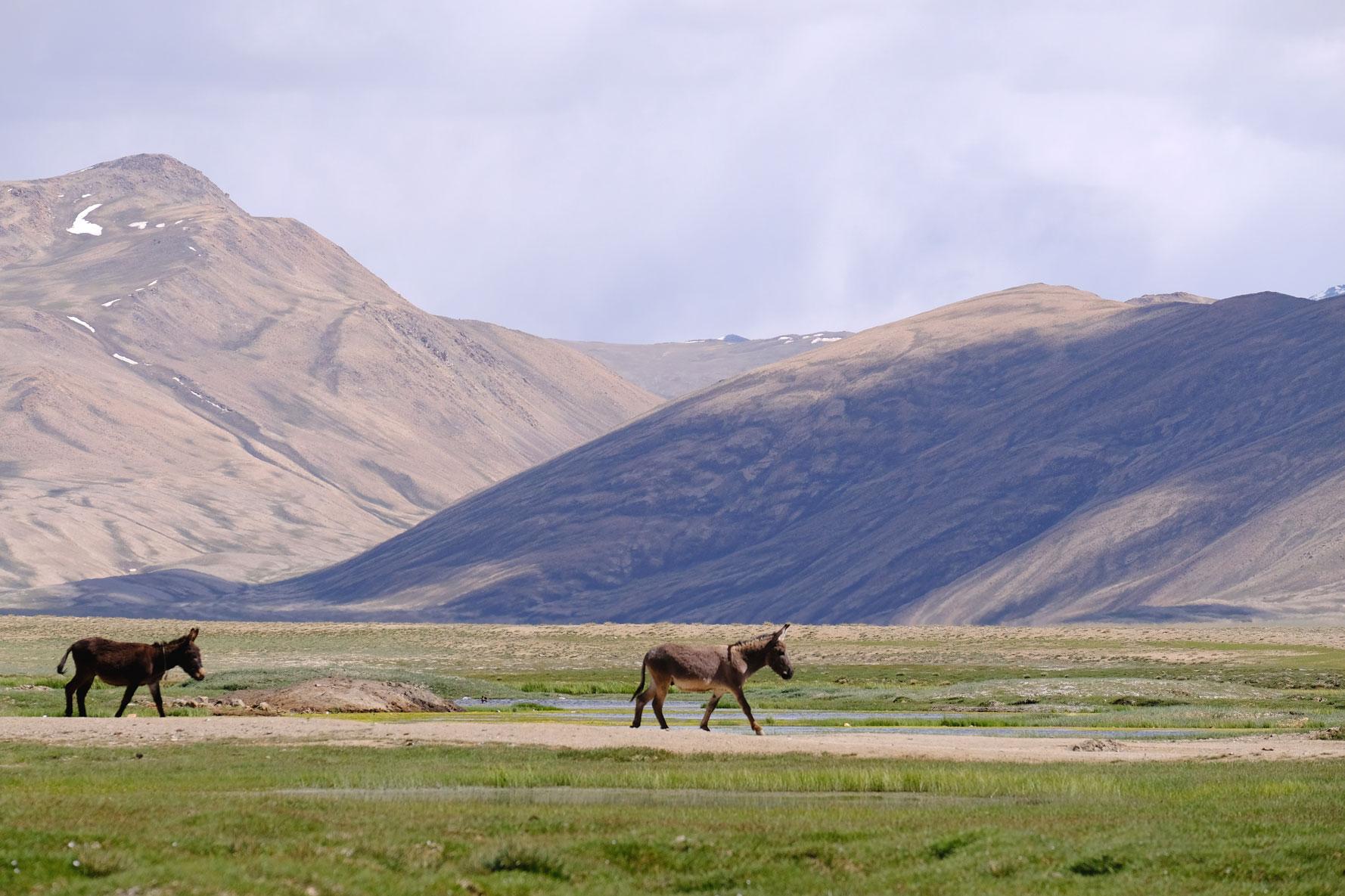 Zwei Esel im Gebirge.