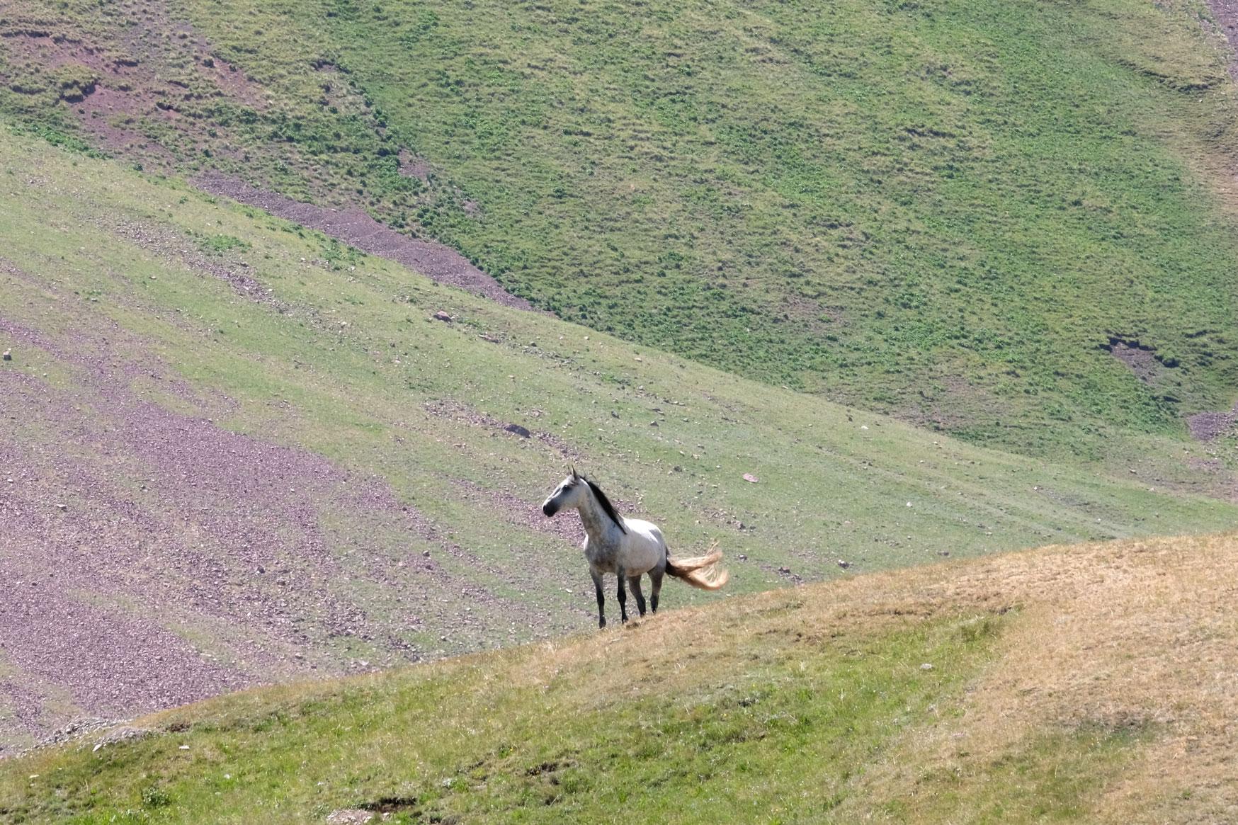 Ein Pferd auf einer Wiese.