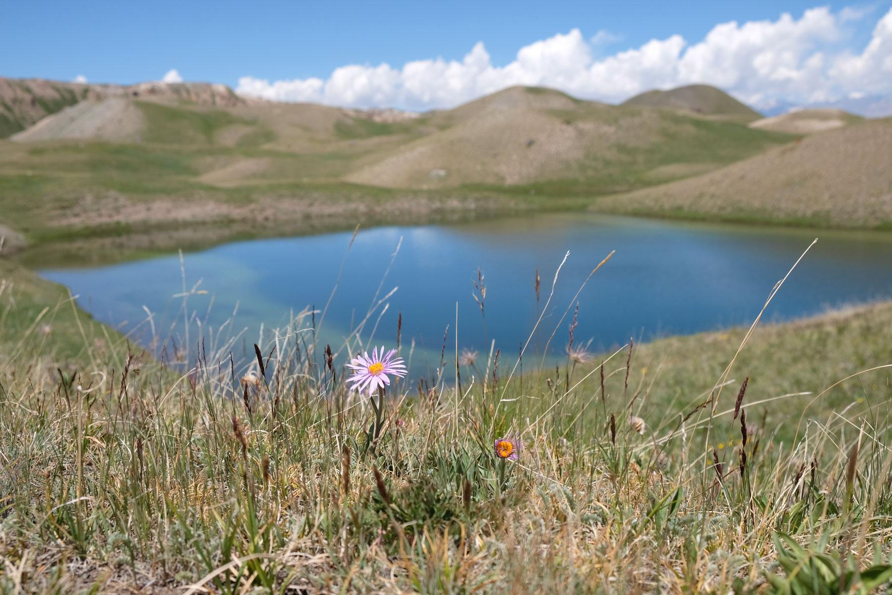 Eine Blume blüht vor einem Bergsee.