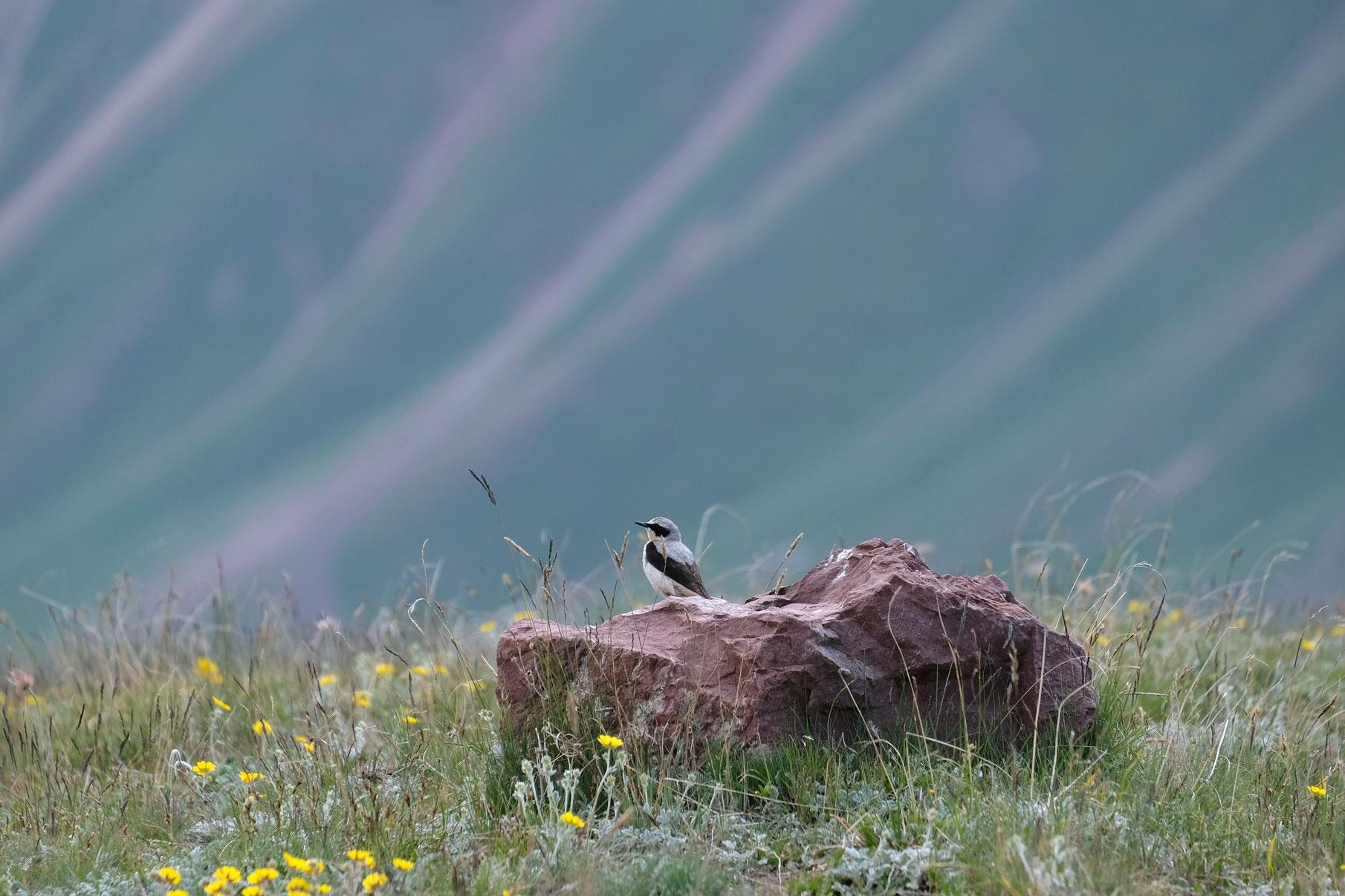 Ein Vogel sitzt auf einer Wiese auf einem Stein.