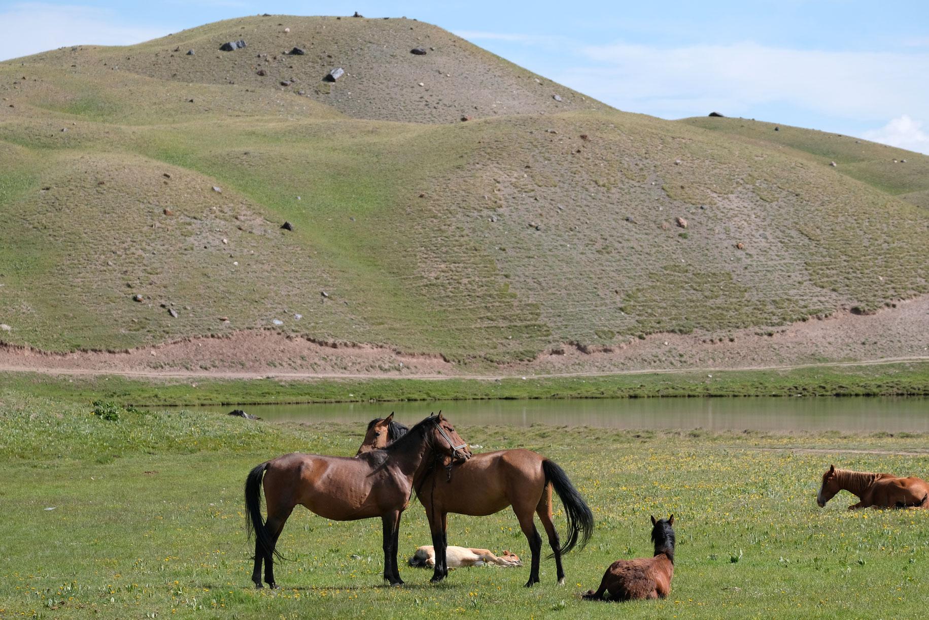Pferde auf einer Wiese.
