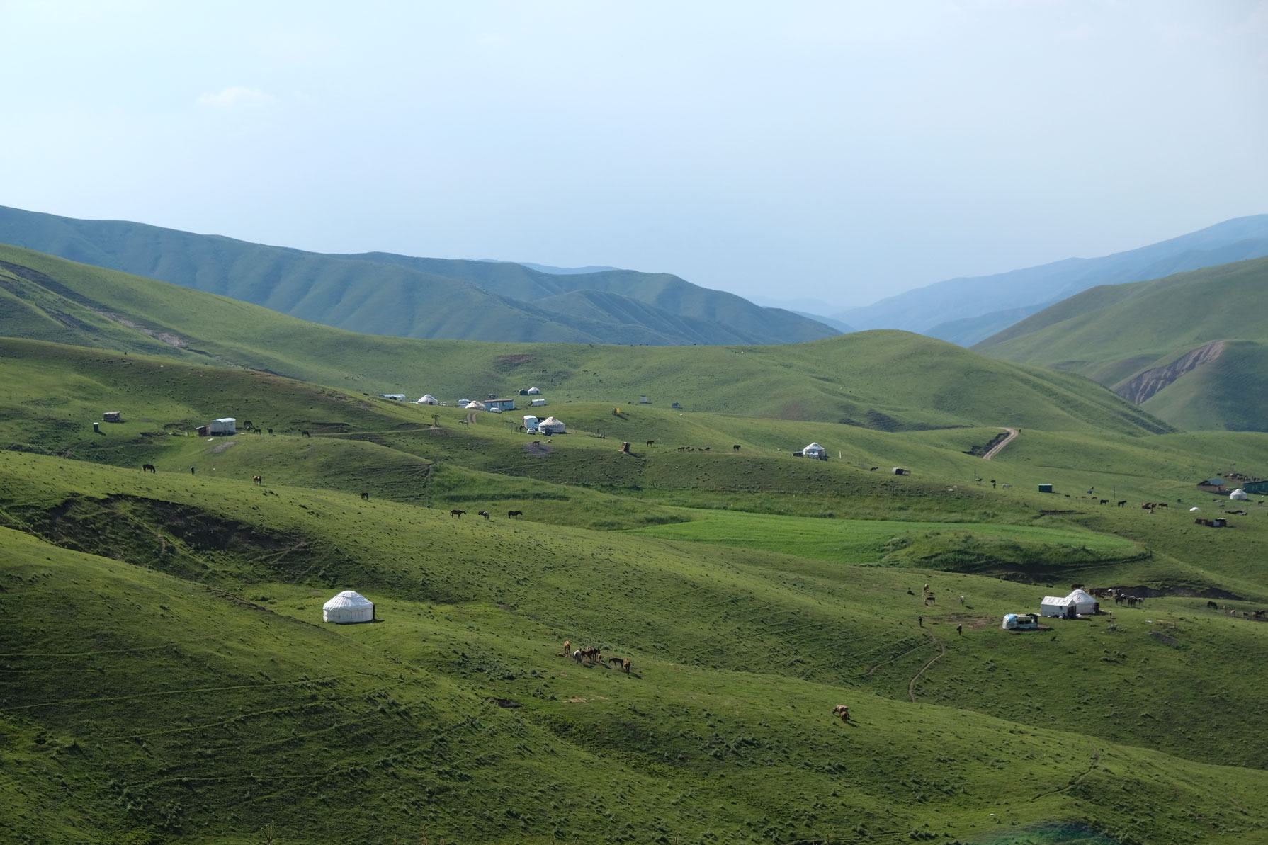 Kirgisische Jurten auf einer großen Wiese.