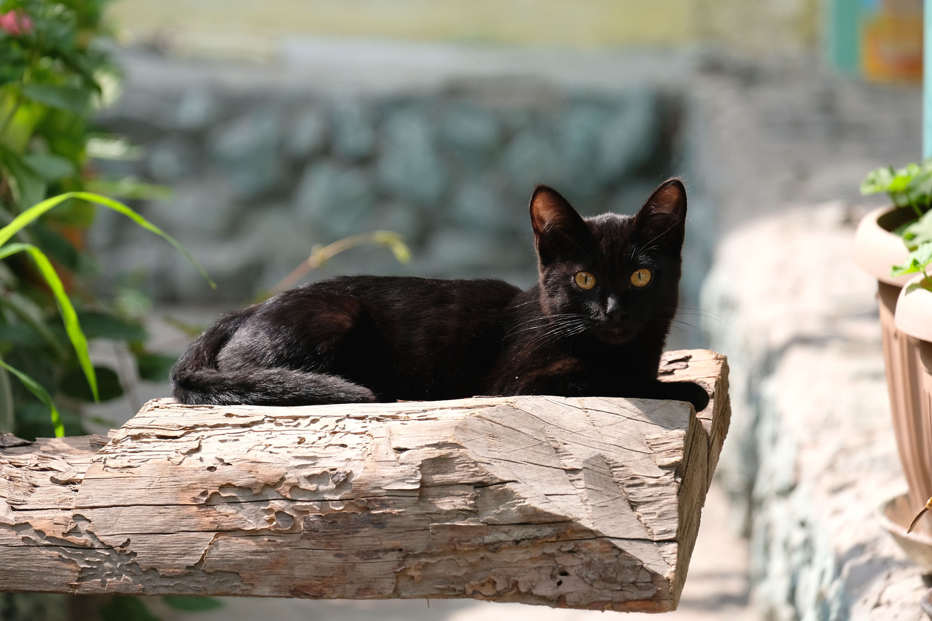 Ein schwarzes Kätzchen sitzt auf einem Holzstamm.