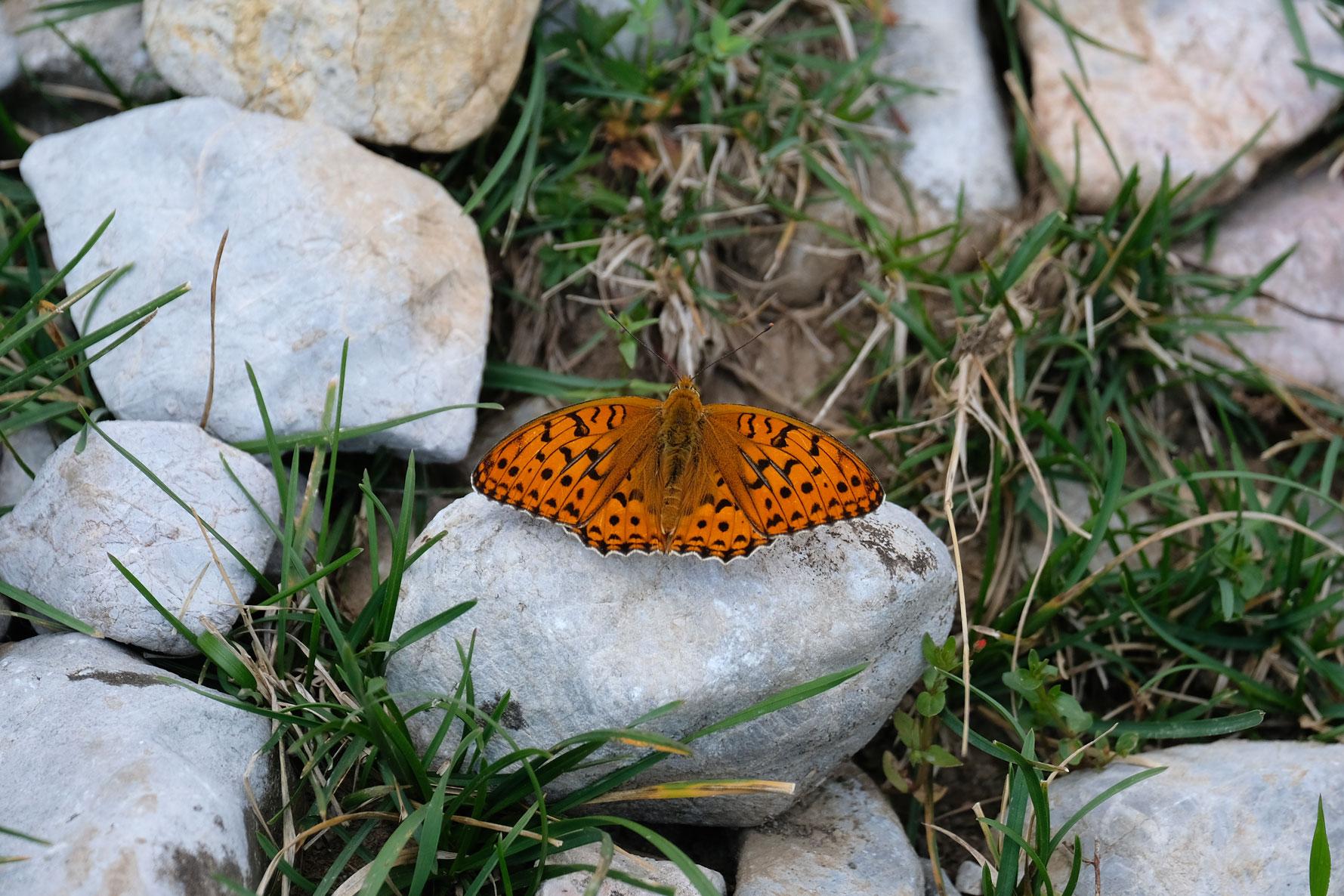 Ein Schmetterling sitzt auf einem Stein.