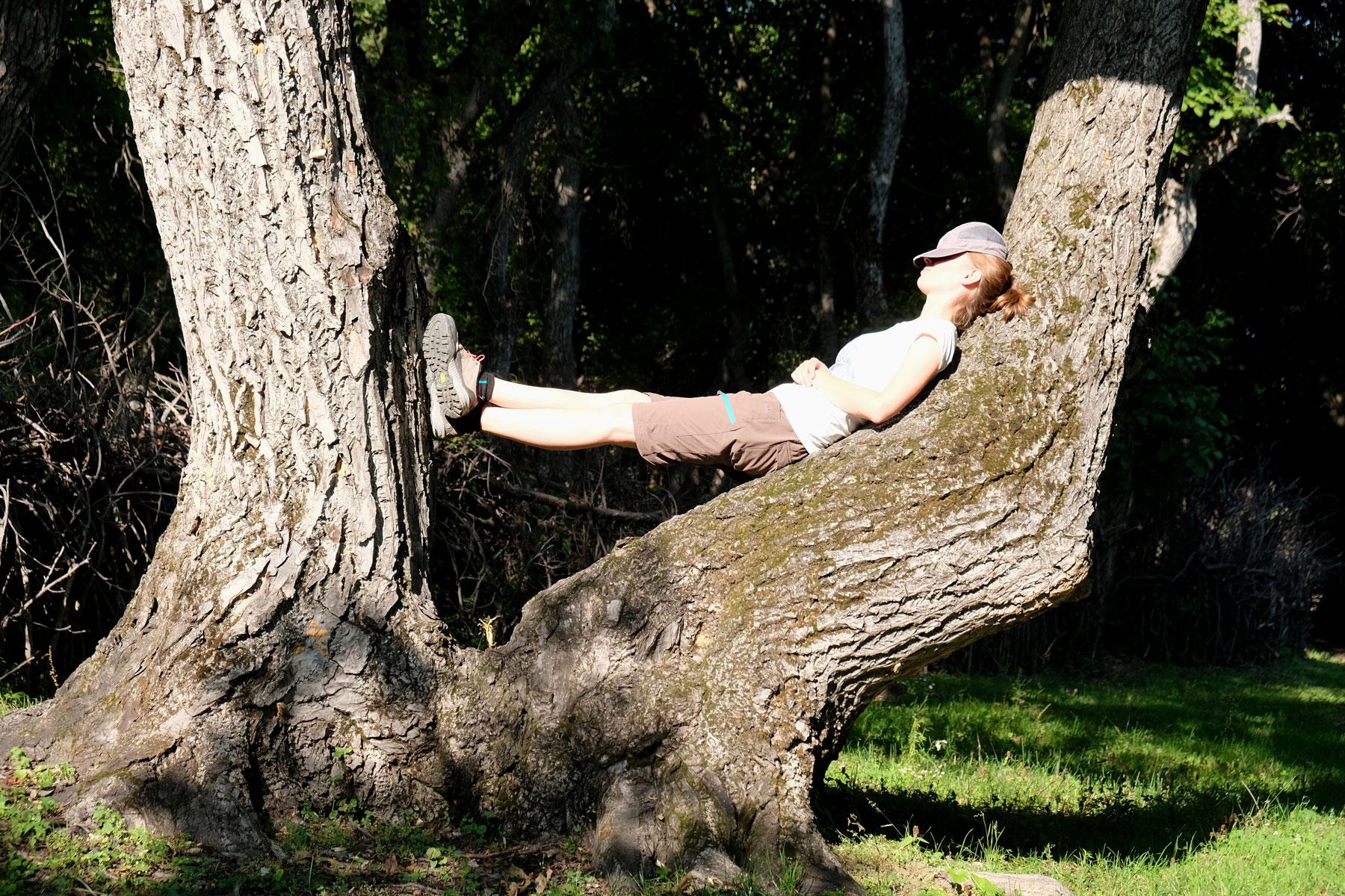 Leo liegt auf einem großen Baumstamm.