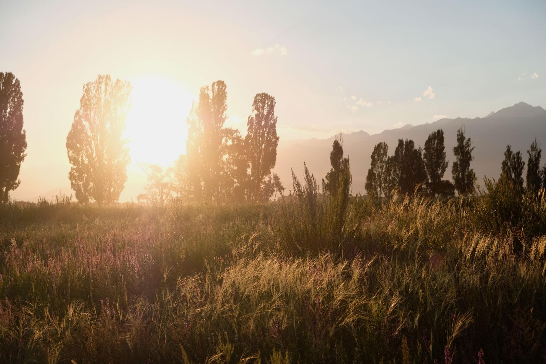 Wiese im Licht des Sonnenuntergangs.