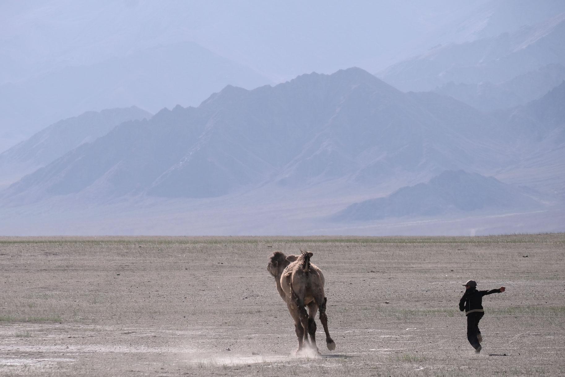 Ein Junge verfolgt ein fliehendes Kamel.