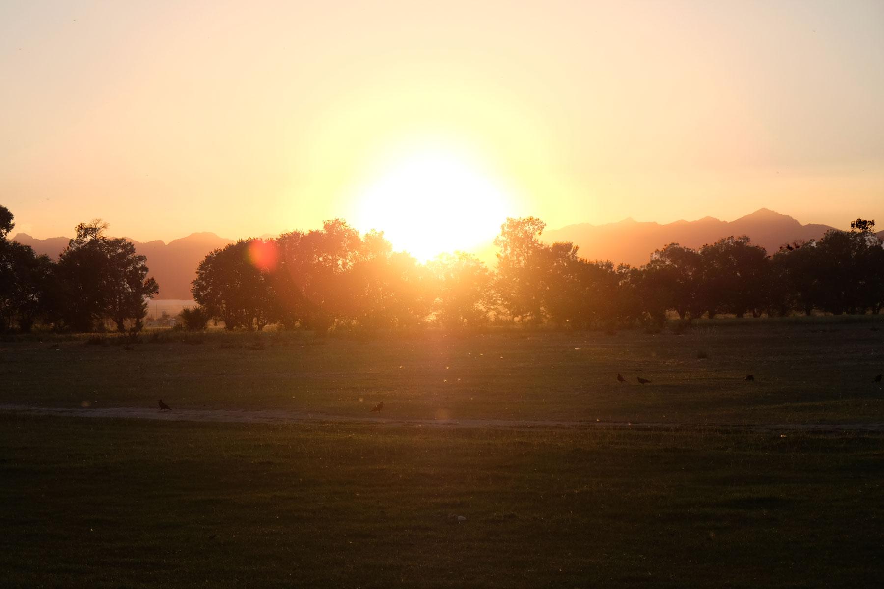 Sonnenuntergang über Bäumen.