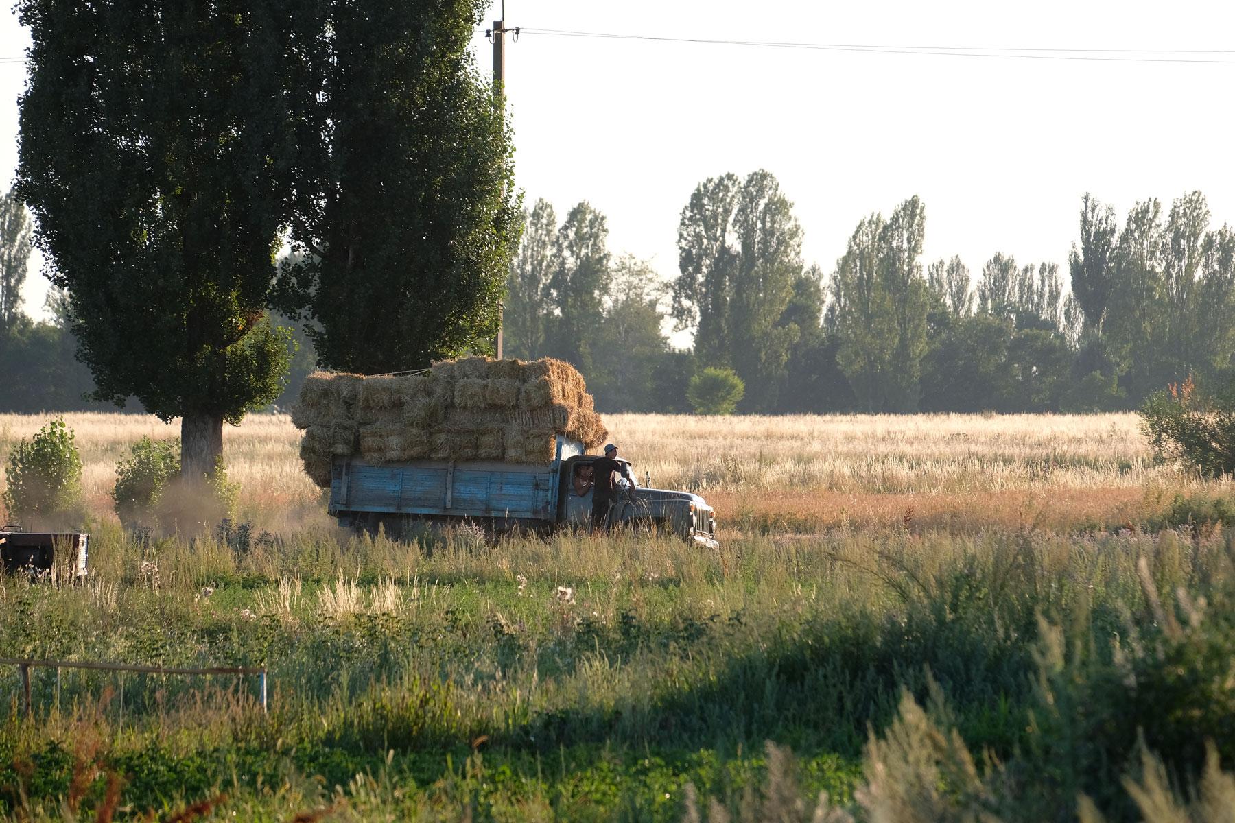 Ein Lastwagen, der mit Stroh beladen ist , fährt über eine Wiese.