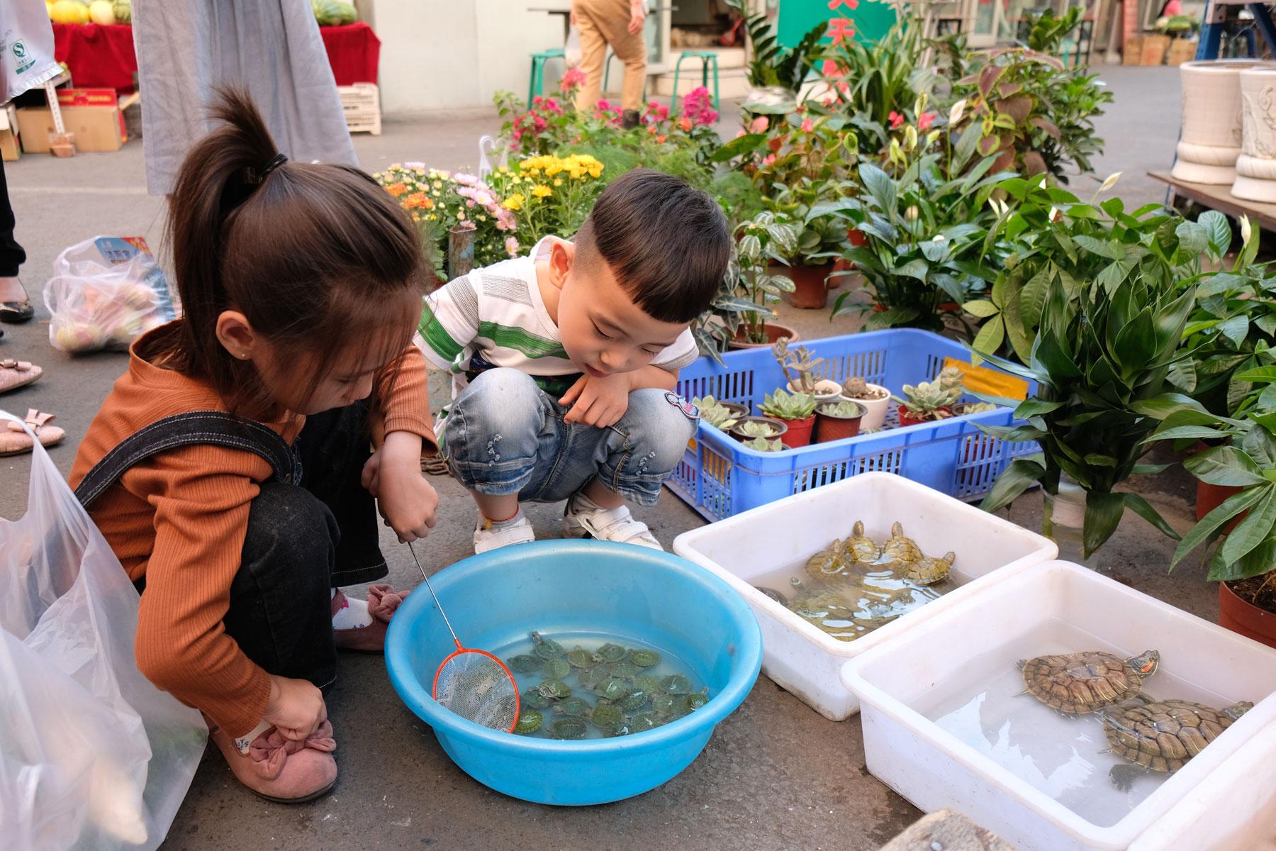 Freizeitbeschäftigung: Kinder keschern kleine Schildkröten...