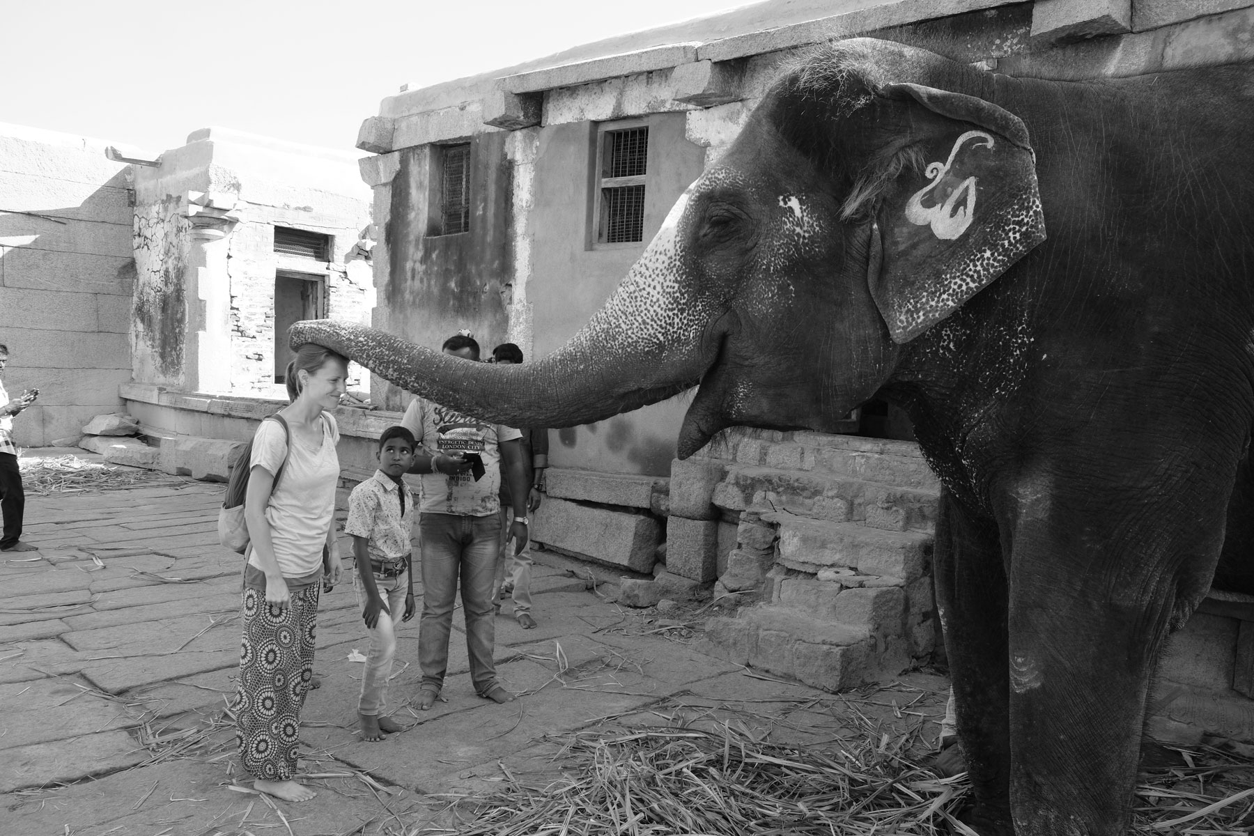 Ein Elefant legt seinen Rüssel auf Leos Kopf.