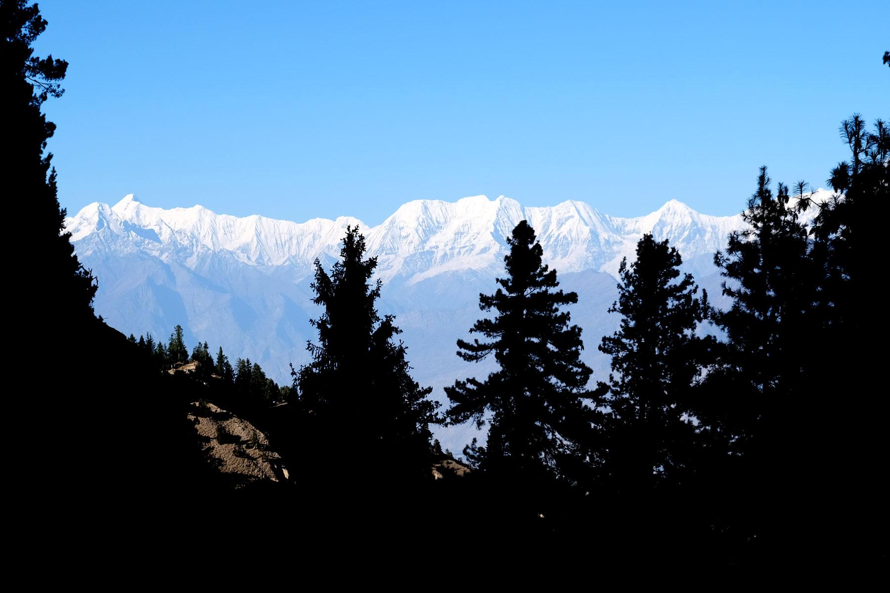 Schneebedeckte Berge vor Nadelbäumen.