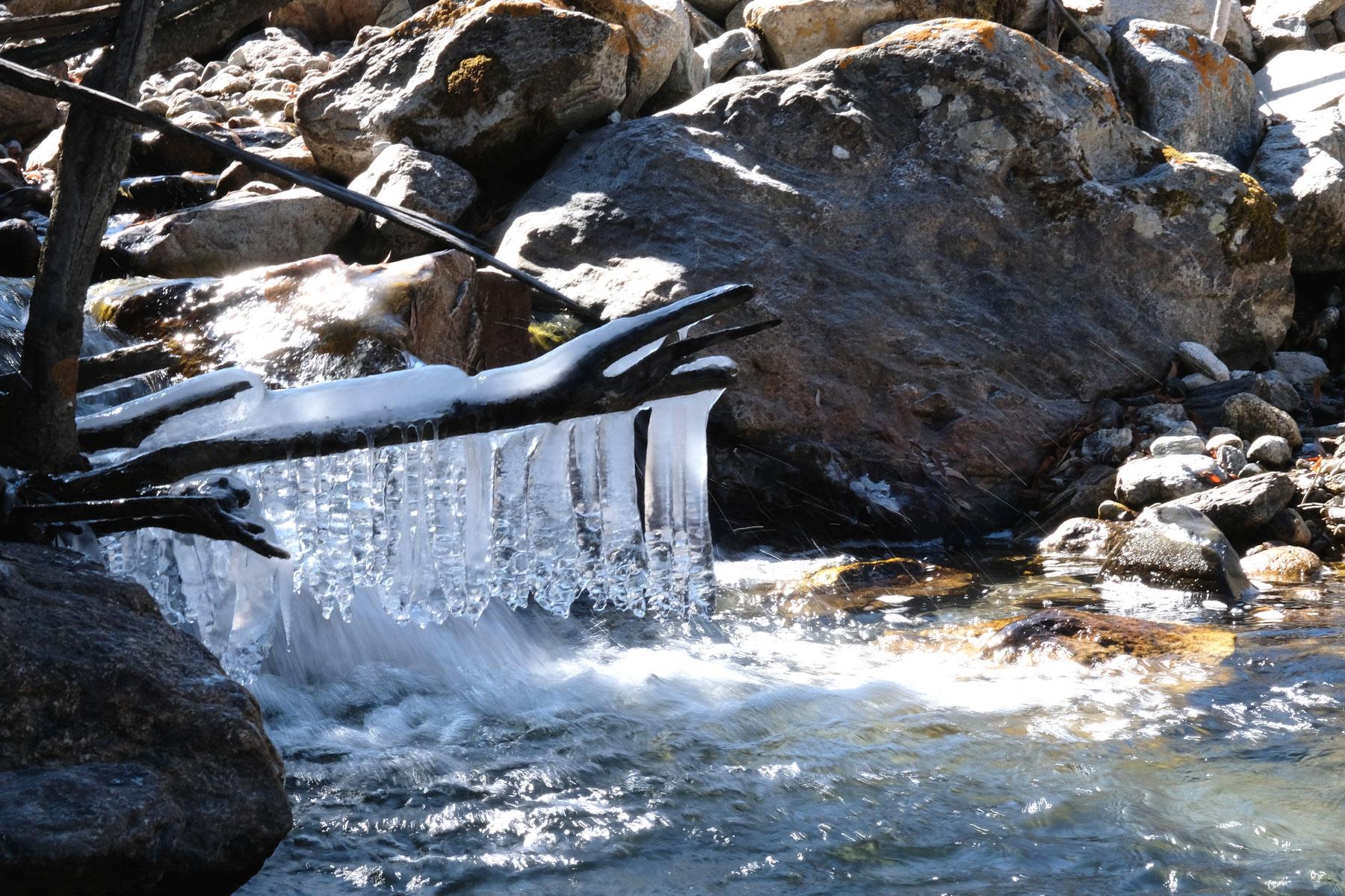 Eiszapfen an einem Ast über einem Bach.