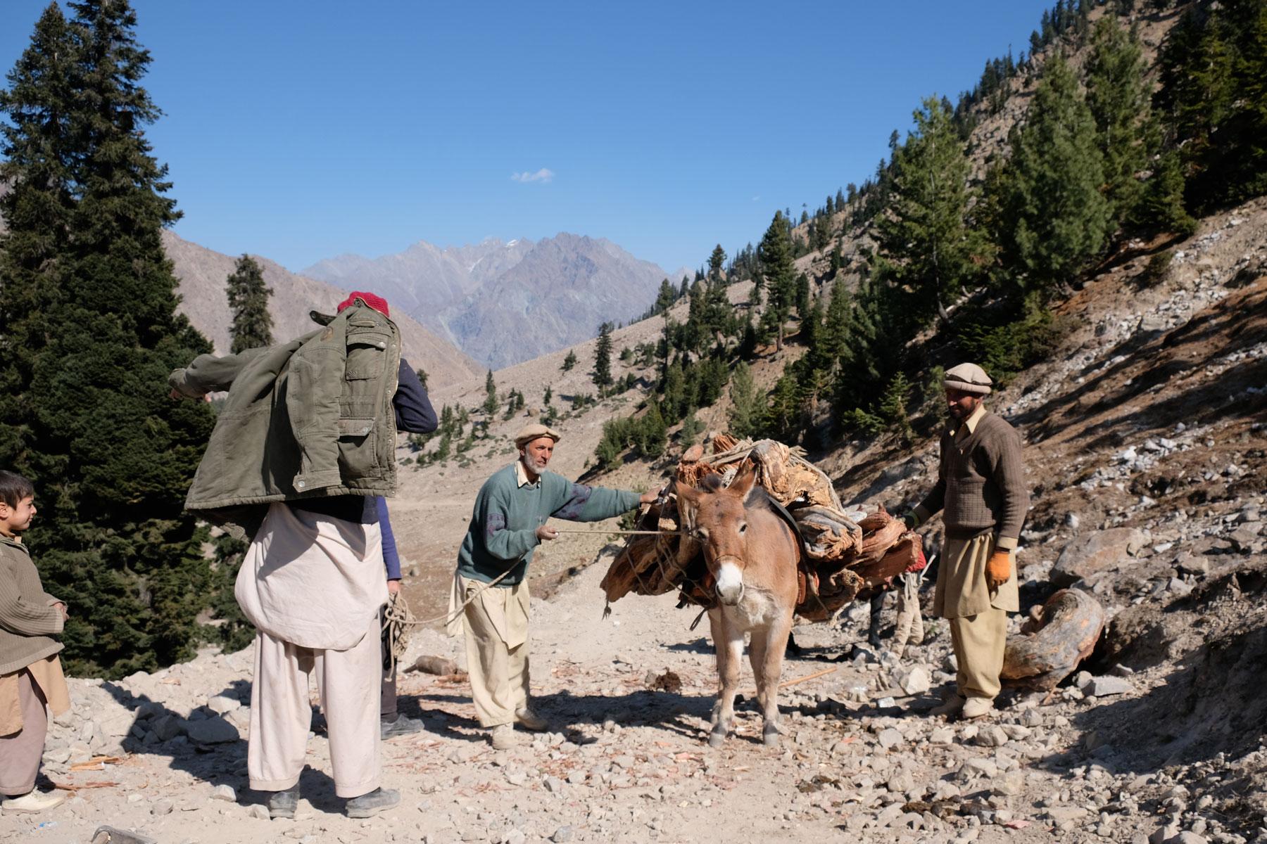 Drei Männer neben einem Esel, der mit Brennholz beladen ist.