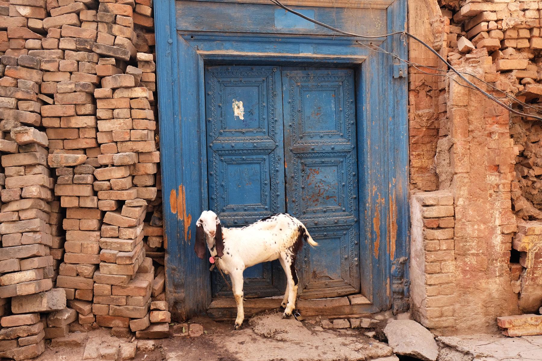 Eine Ziege vor einer Tür in Rawalpindi.