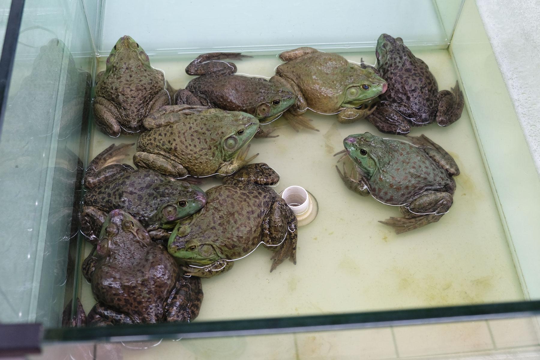Kröten sitzen auf dem Grund eines Wasserbeckens auf dem Boden.