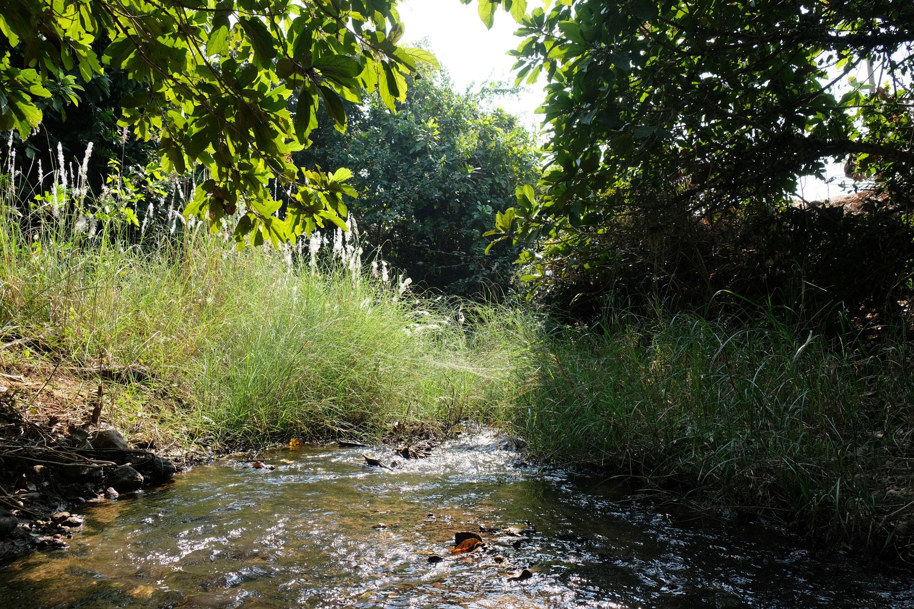 Ein Bach, der von Gras und Bäumen umgeben ist.
