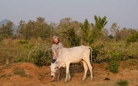 Sebastian mit einer indischen Kuh.