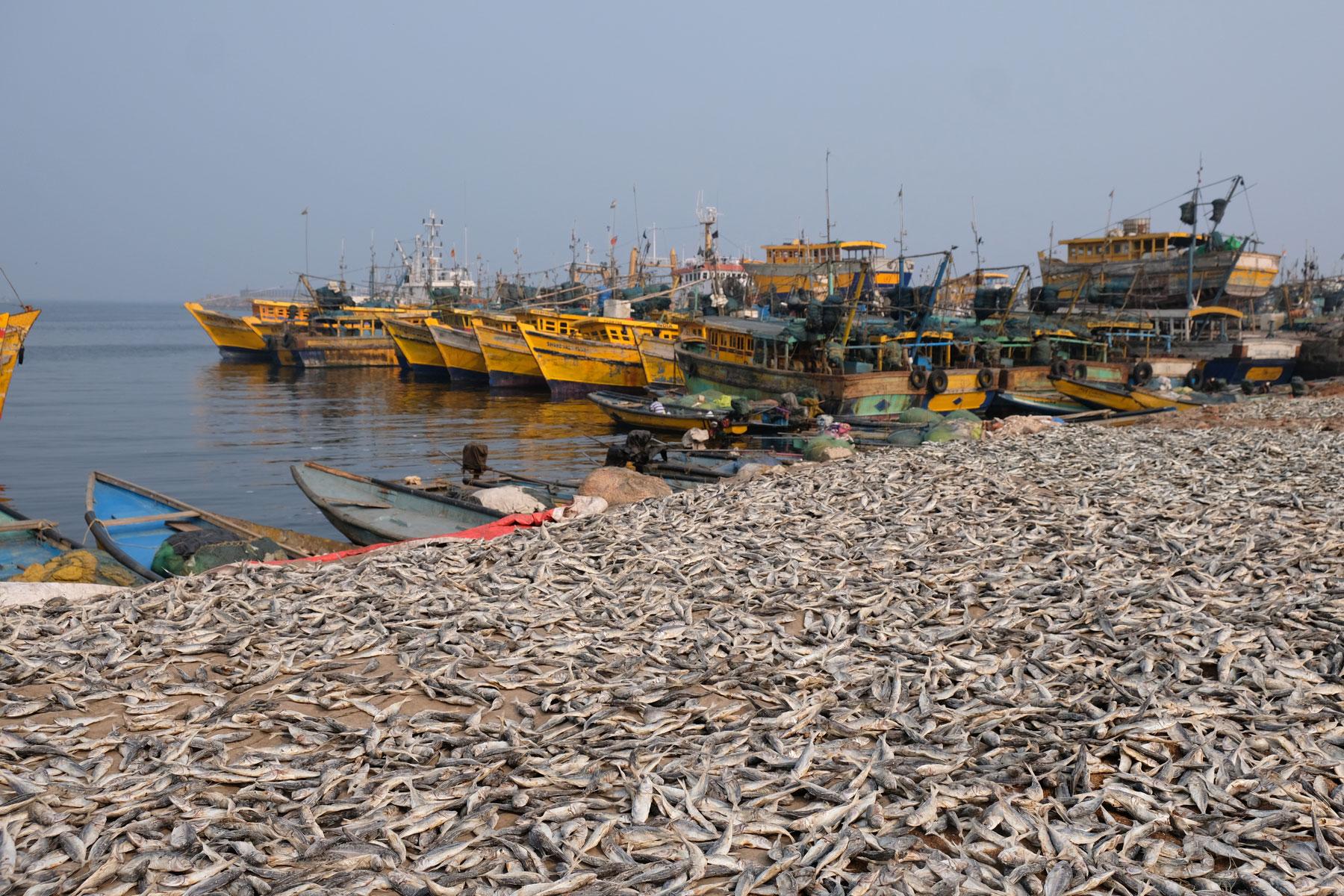 Fische und Fischerboote am Hafen von Visakhapatnam.