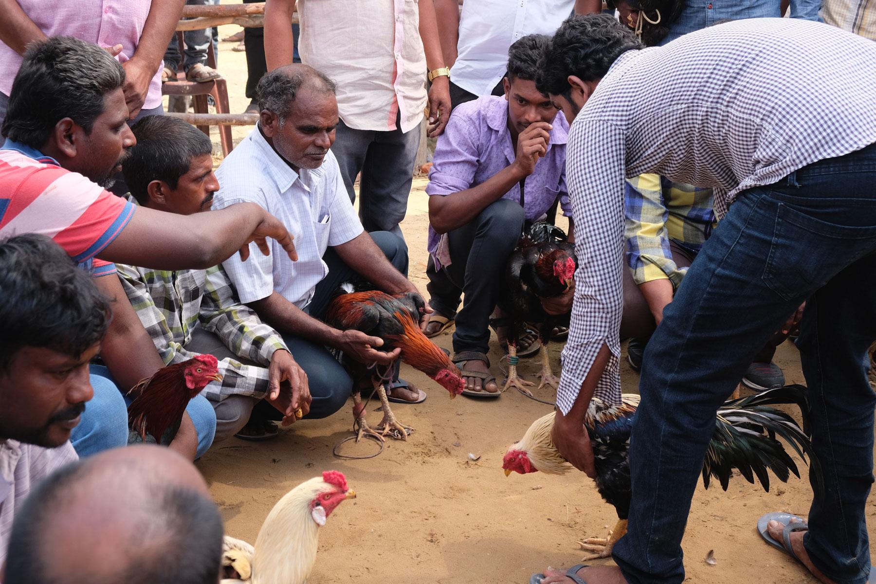 Männer halten beim Sankranthi Festival in Bhimavaram Kampfhähne im Arm.