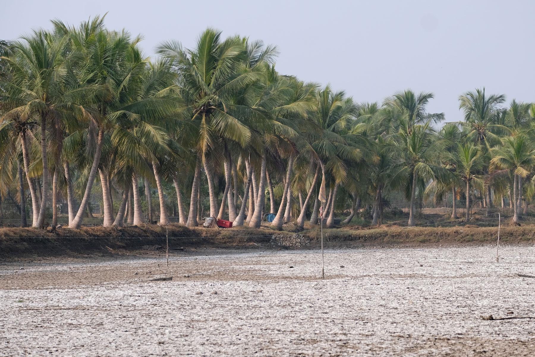 Ein versalzener Boden neben Palmen.