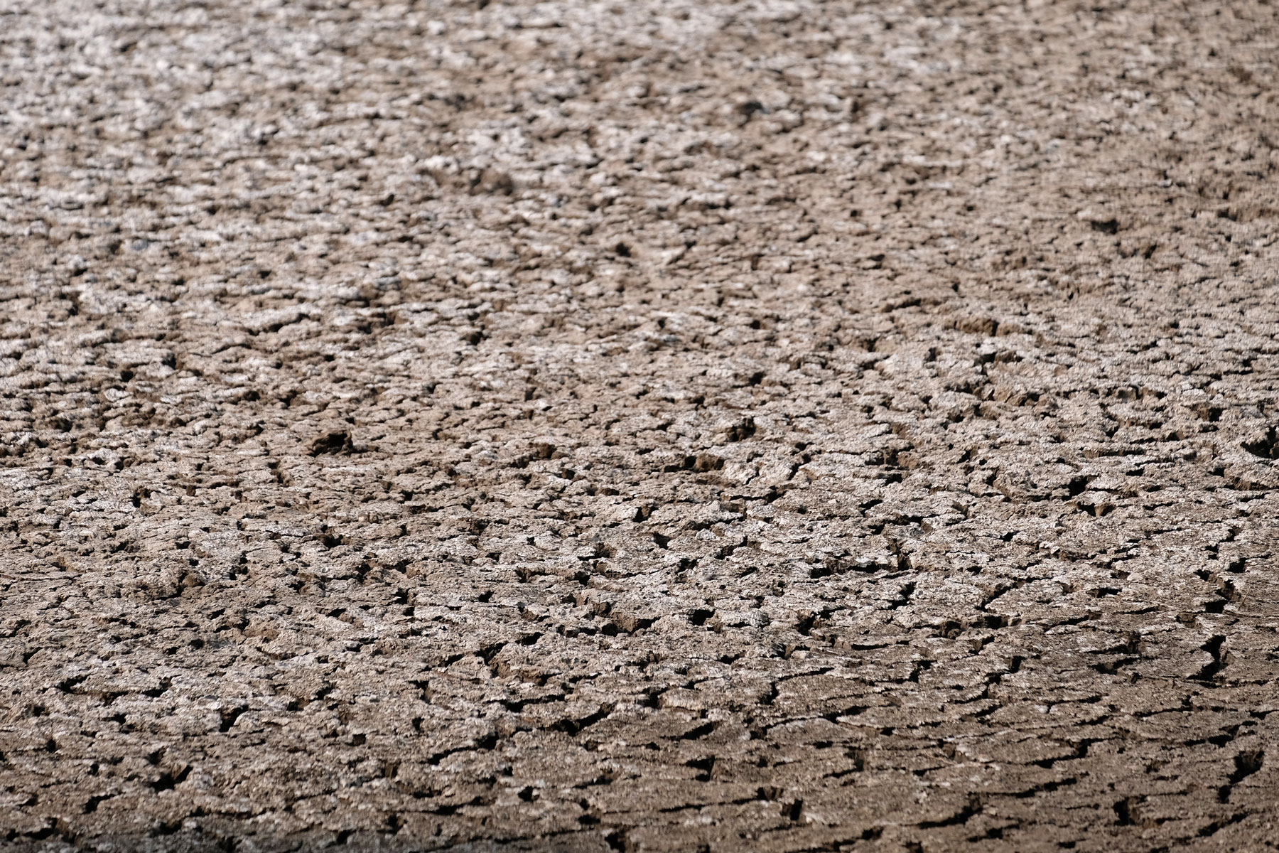 Trockene Erde, die mit einer weißen Salzschicht belegt ist.