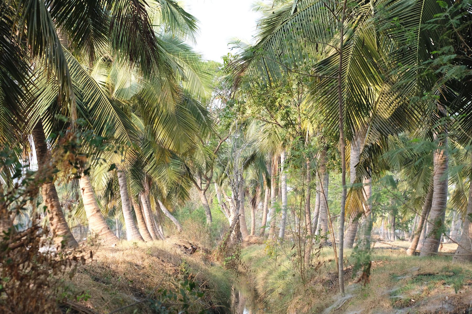 Palmen und ein Wassergraben.
