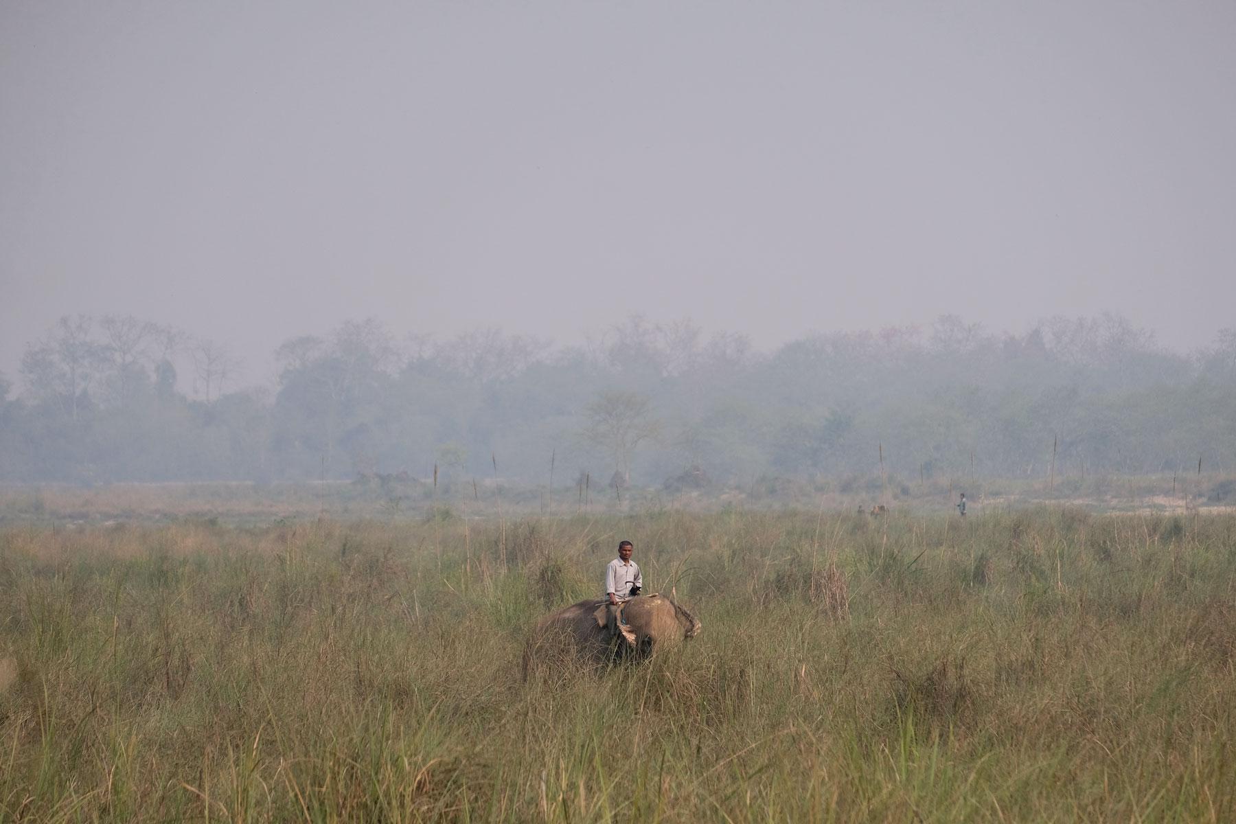 Ein Mann reitet auf einem Elefant durch hohes Gras im Chitwan Nationalpark.