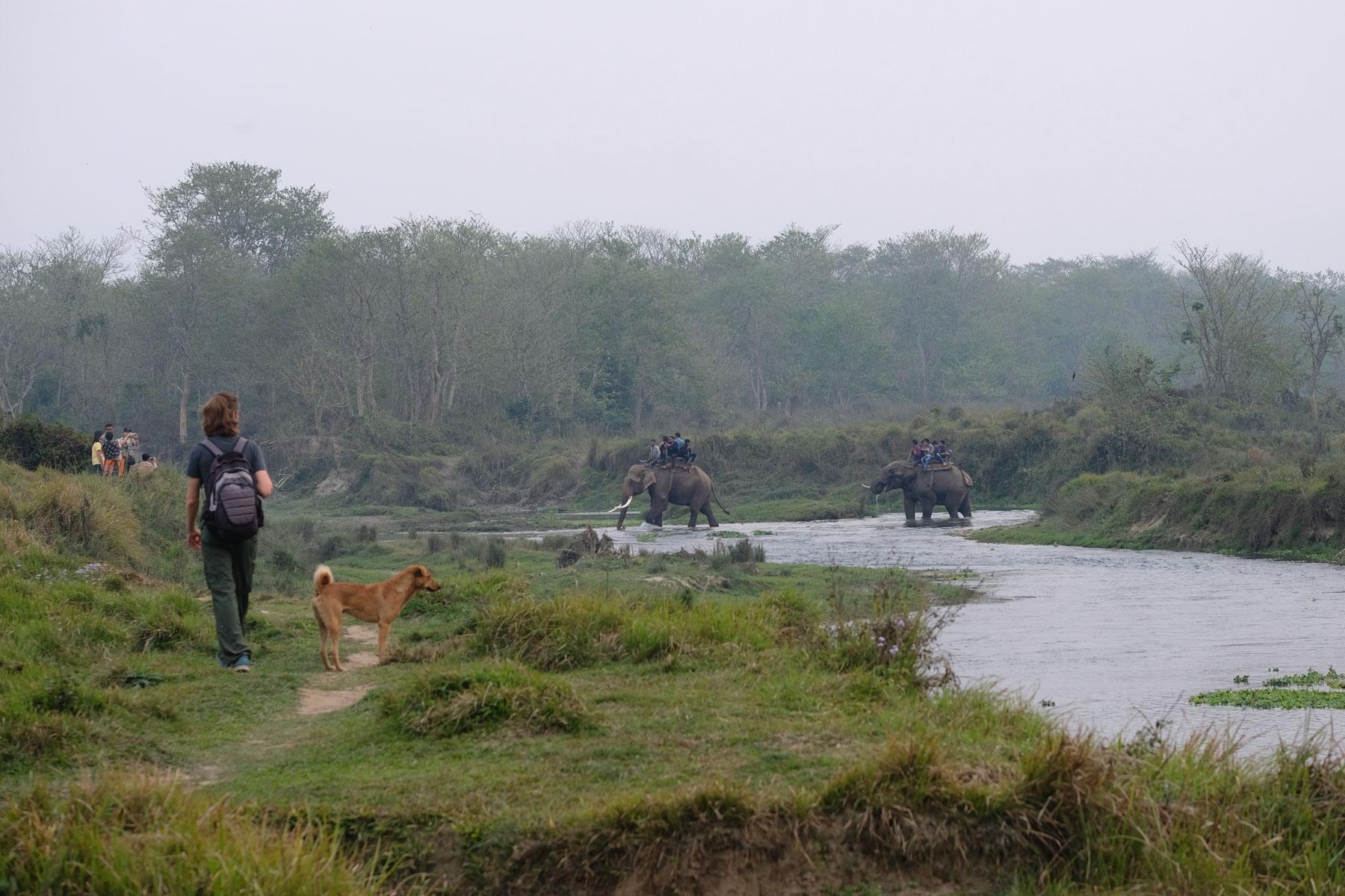 Sebastian geht neben einem Hund und schaut zu zwei berittenen Elefanten, die im Fluss waten.