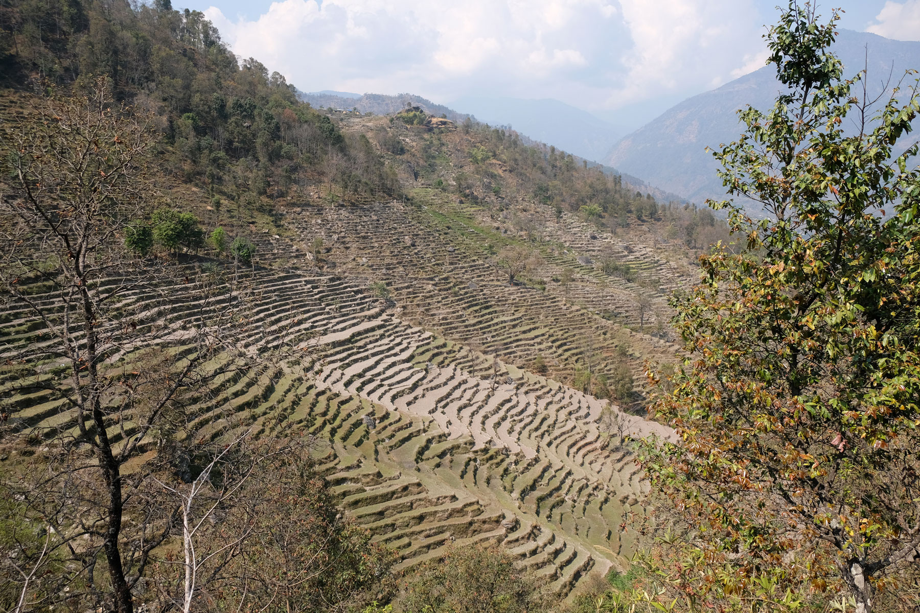 Terrassenförmige Felder auf dem Annapurna Circuit.