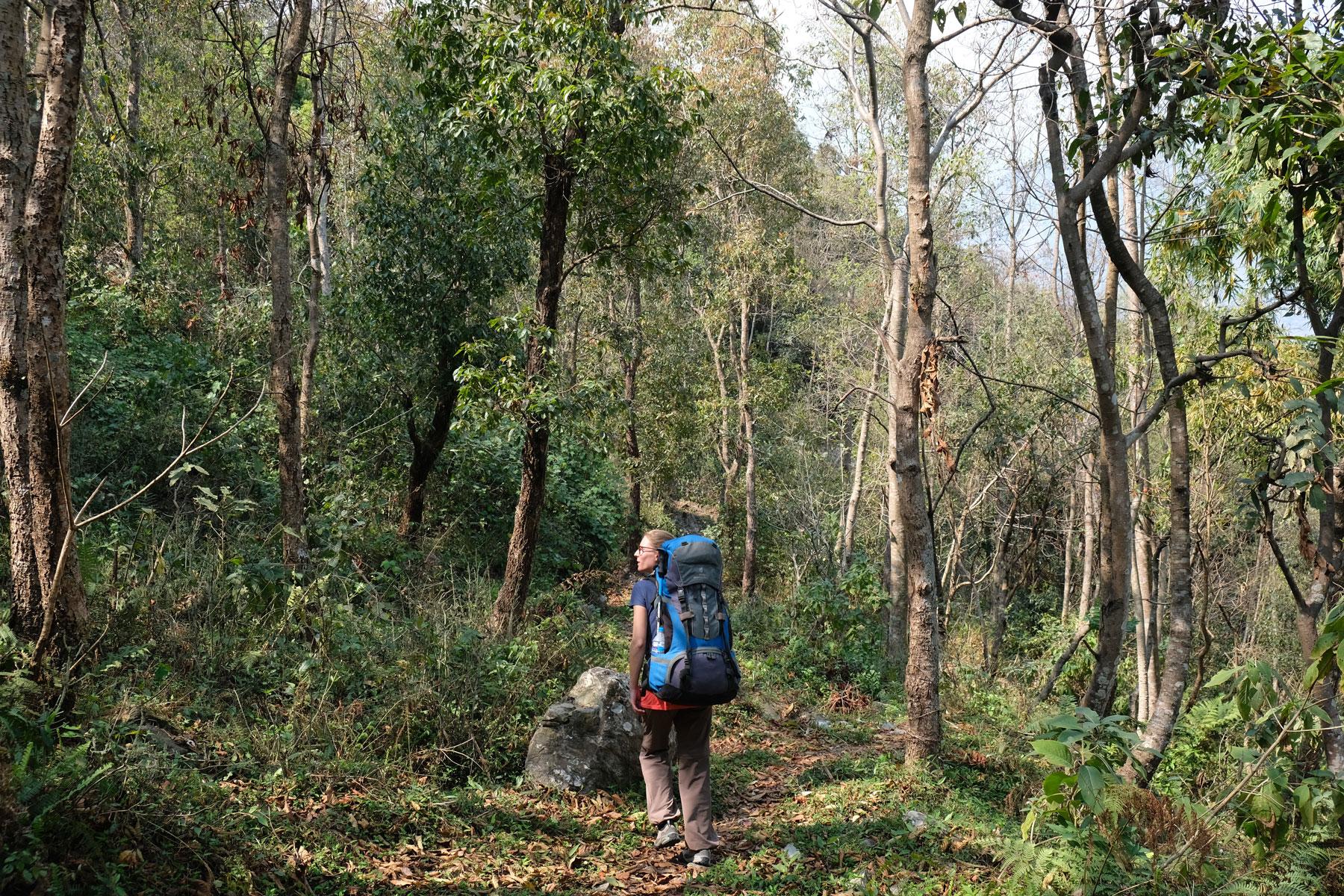 Leo wandert mit großem Rucksack durch einen Wald.