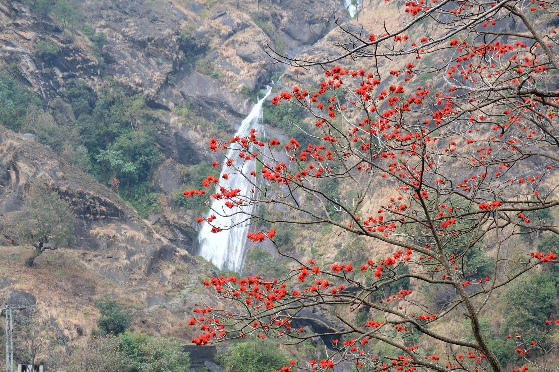 Ein Baum mit roten Blüten vor einem Wasserfall.