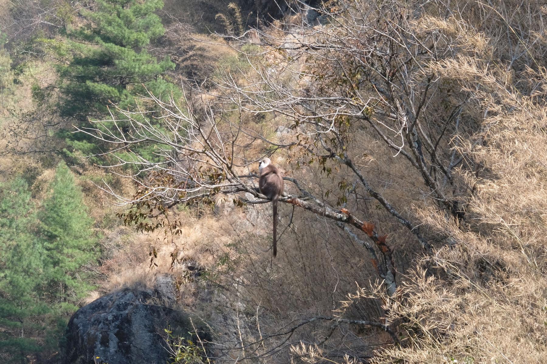 Ein Affe sitzt auf einem Baum.