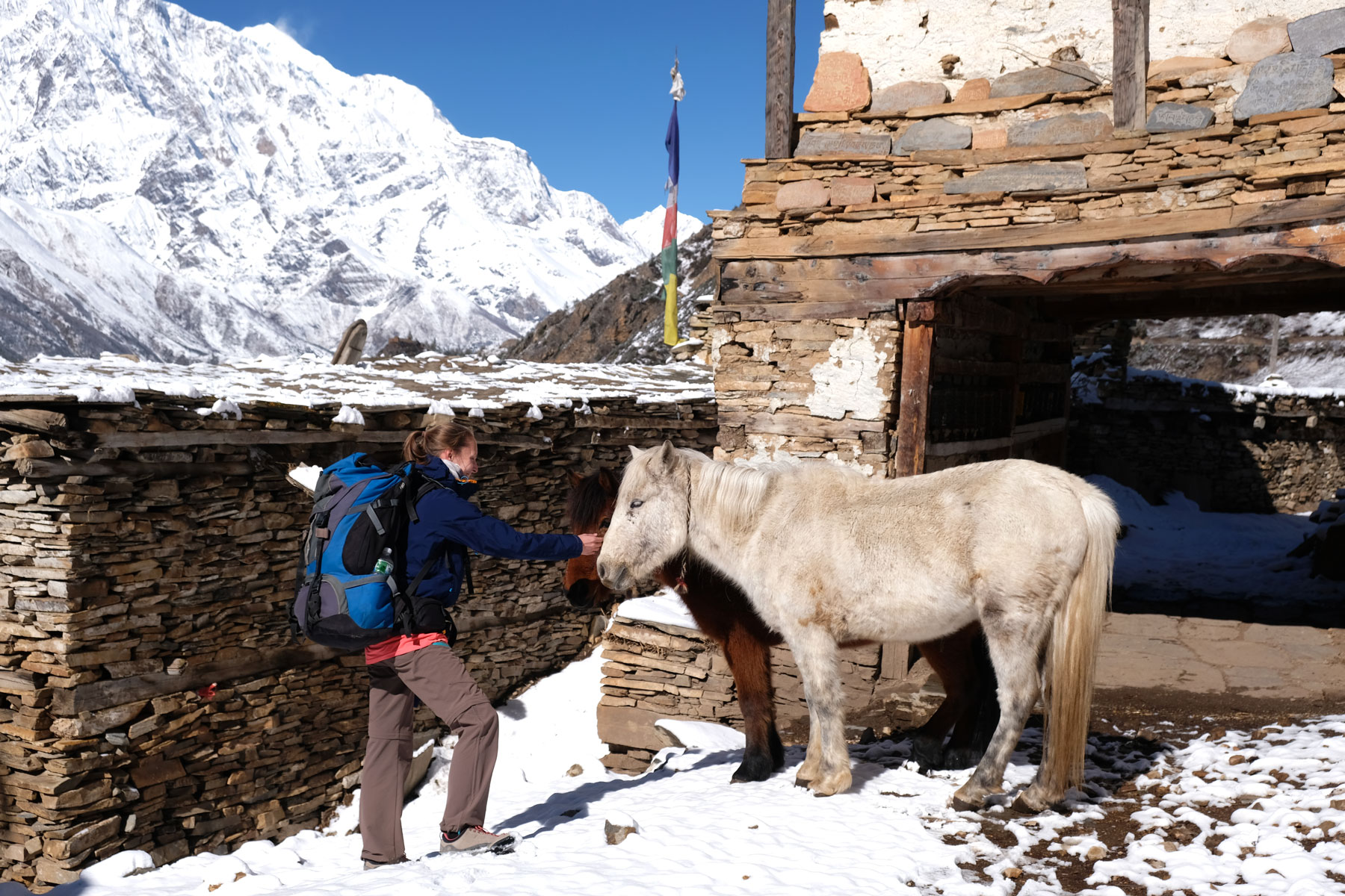 Leo streichelt zwei Pferde in Ghyaru.