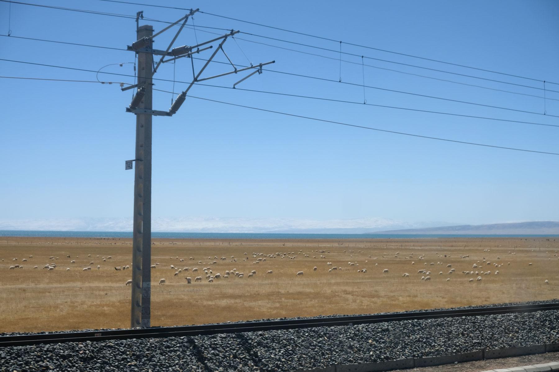 Eine Schafherde in Tibet und Bahngleise vom Zug zwischen Lhasa und Chengdu.